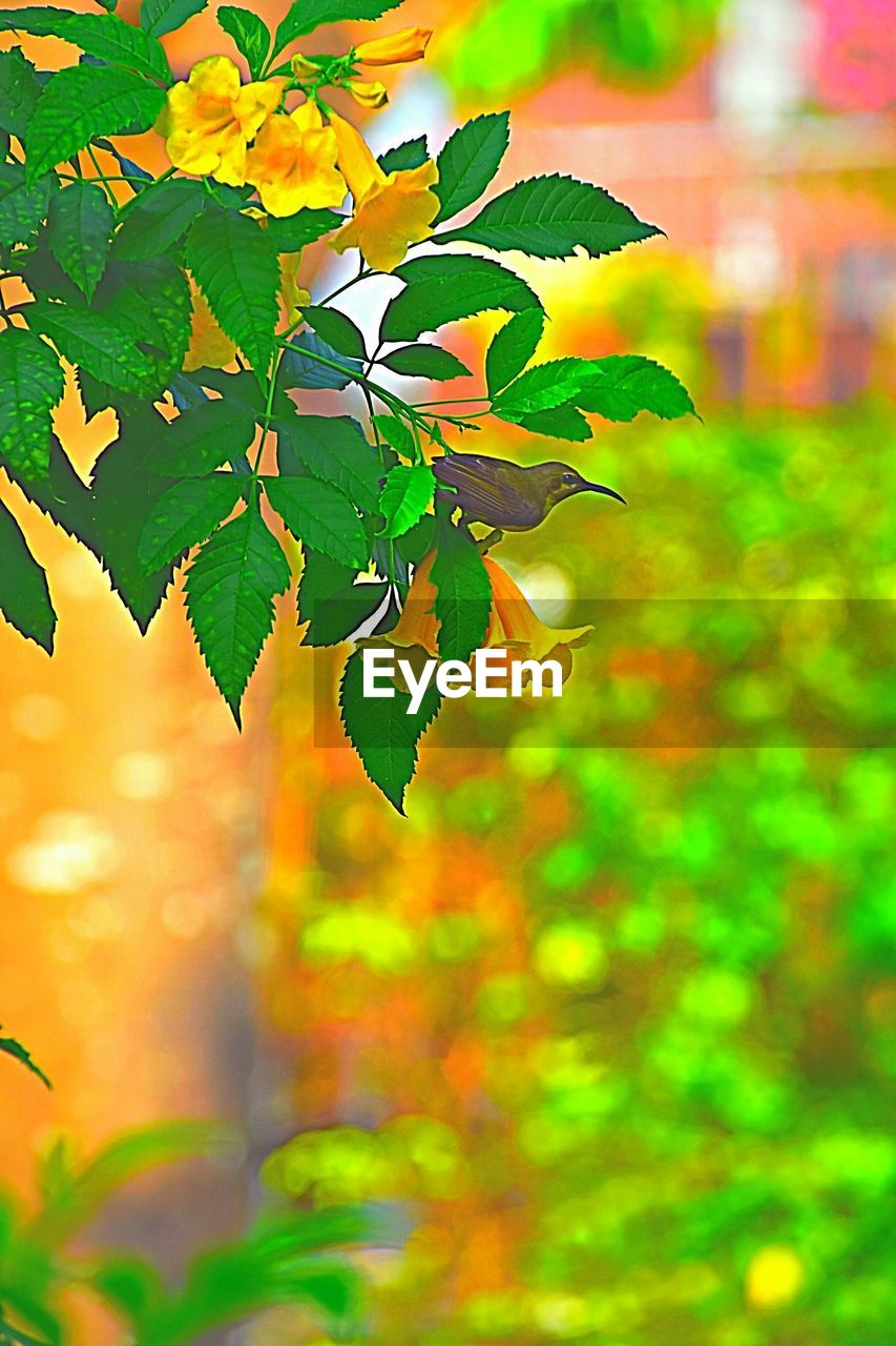 leaf, plant part, plant, growth, green color, beauty in nature, nature, close-up, no people, day, selective focus, outdoors, focus on foreground, autumn, freshness, tree, orange color, tranquility, sunlight, branch, maple leaf, leaves