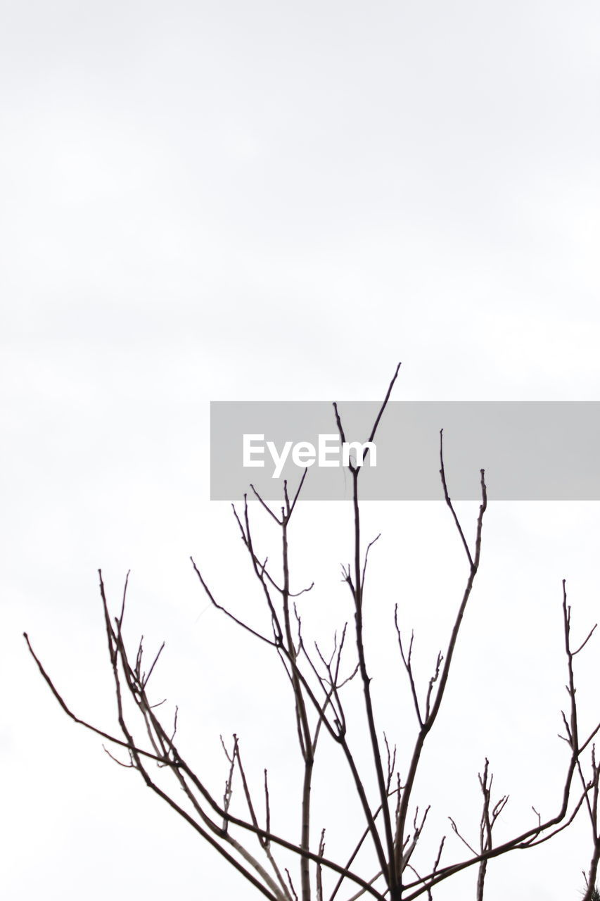 nature, low angle view, no people, outdoors, beauty in nature, branch, sky, tranquility, day, bare tree, clear sky, tree