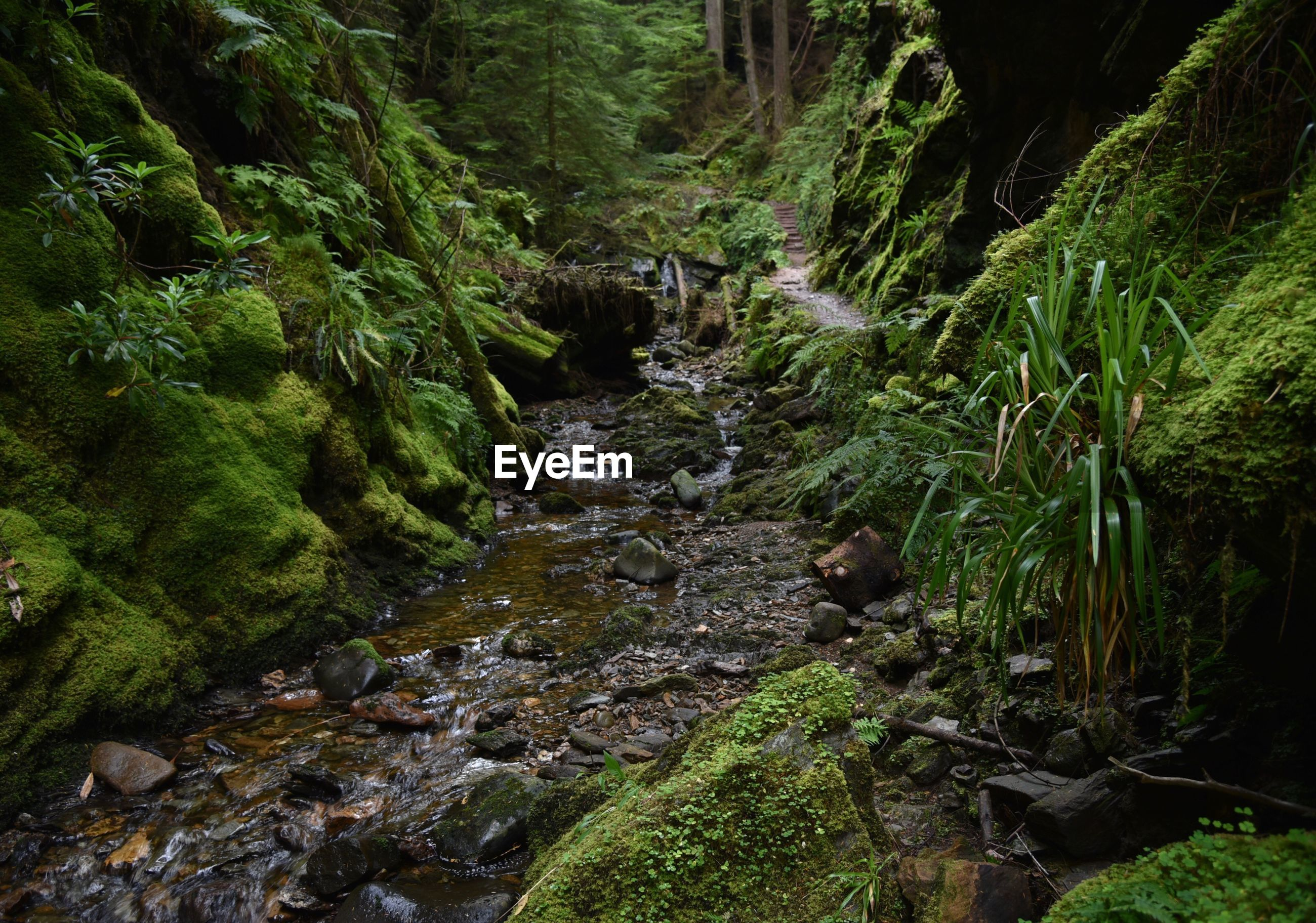 forest, tree, tranquility, stream, tranquil scene, non-urban scene, scenics, water, woodland, narrow, tree trunk, nature, flowing, moss, beauty in nature, footpath, travel destinations, river, green color, plant, growth, the way forward, stone, canal, long, outdoors, messy, ethereal, tourism, lush foliage, solitude