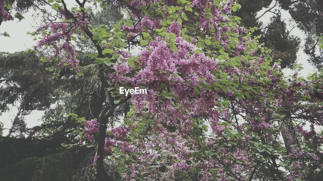 tree, flower, growth, nature, blossom, beauty in nature, springtime, pink color, branch, fragility, no people, freshness, outdoors, day, low angle view, plant