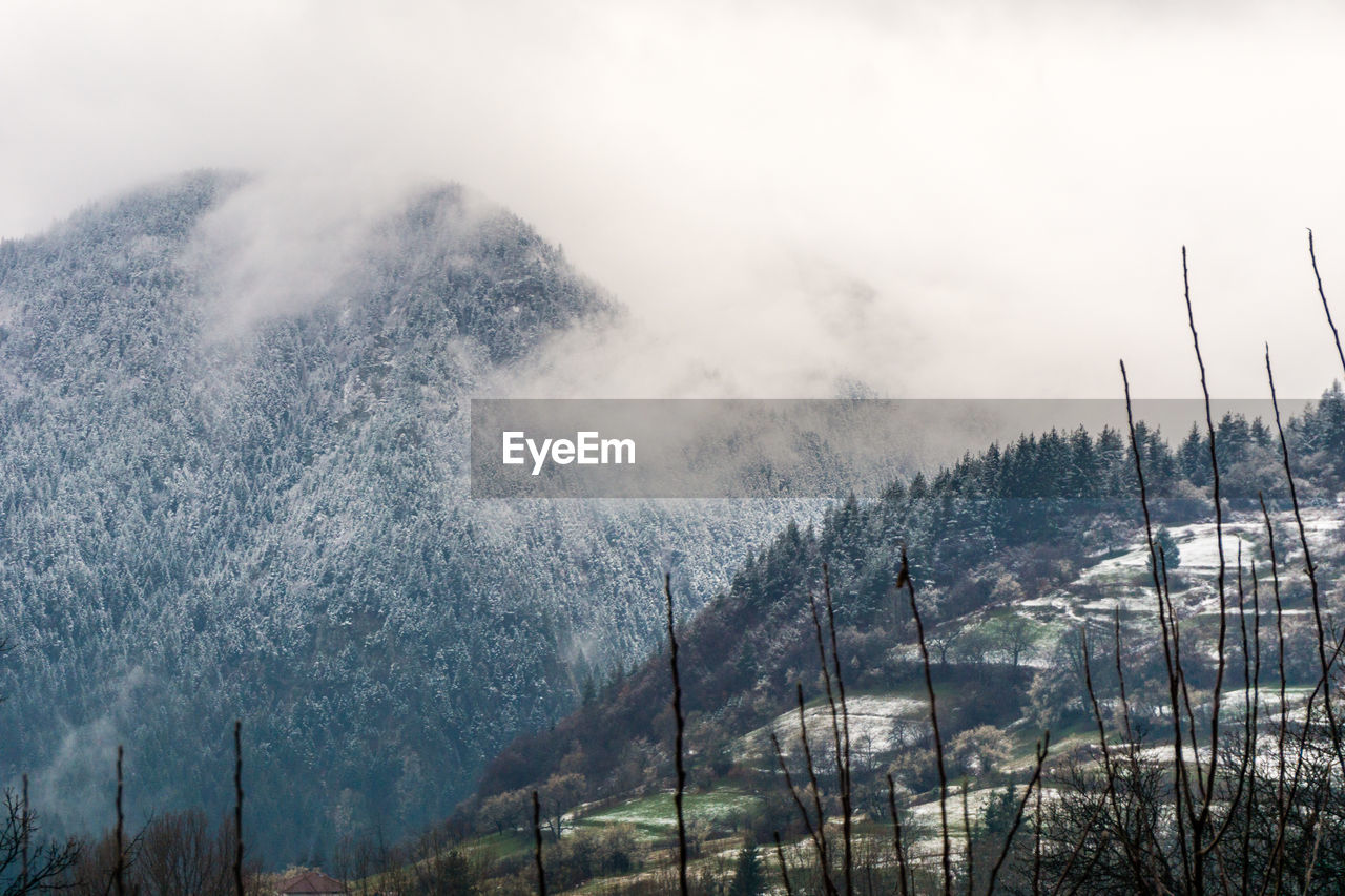 Scenic View Of Forest Against Sky During Winter