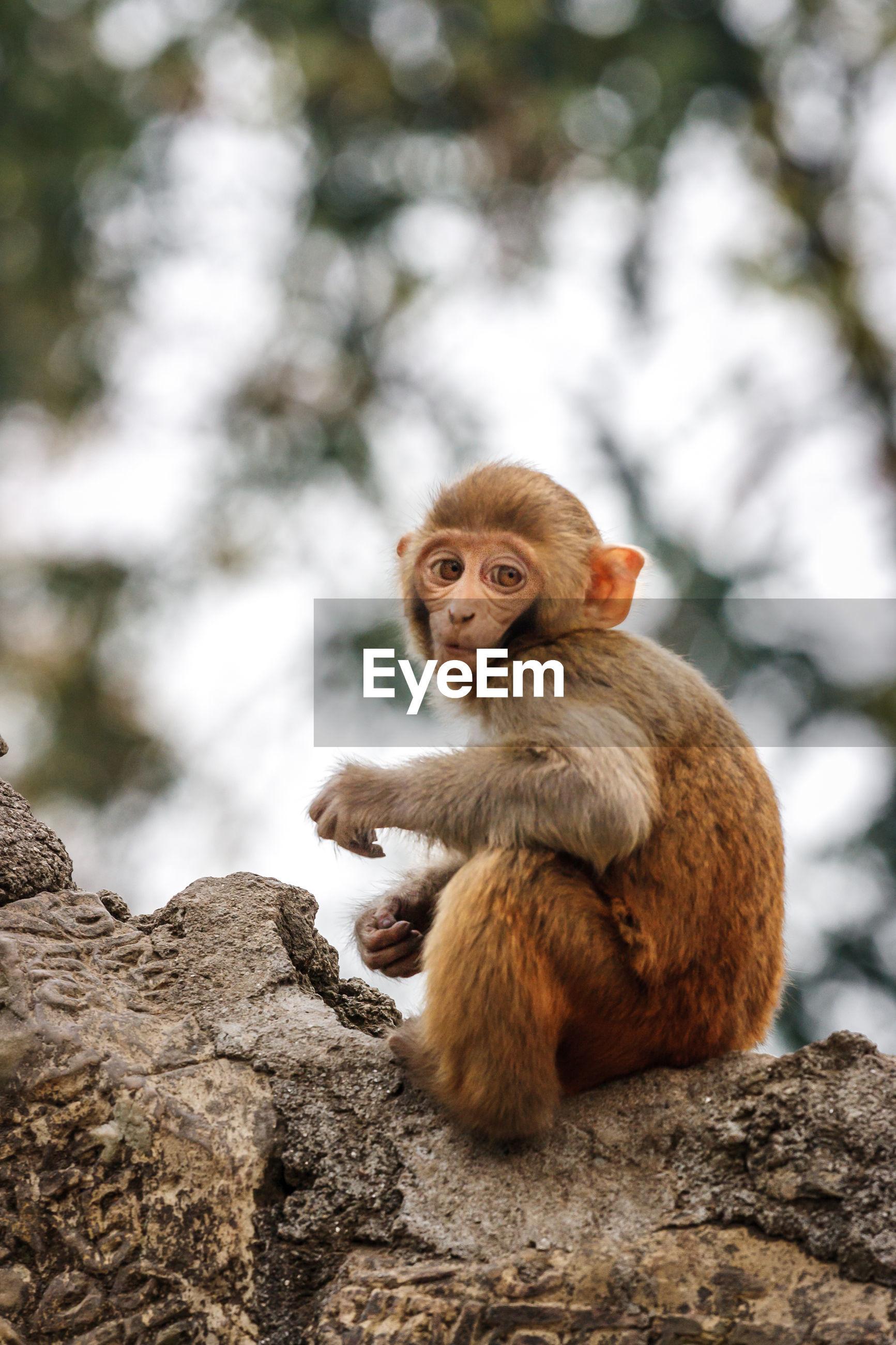 Close-up of monkey sitting carved rocks