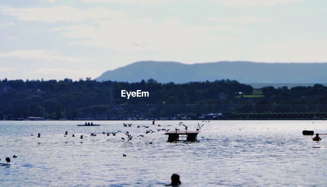 Birds flying over a lake