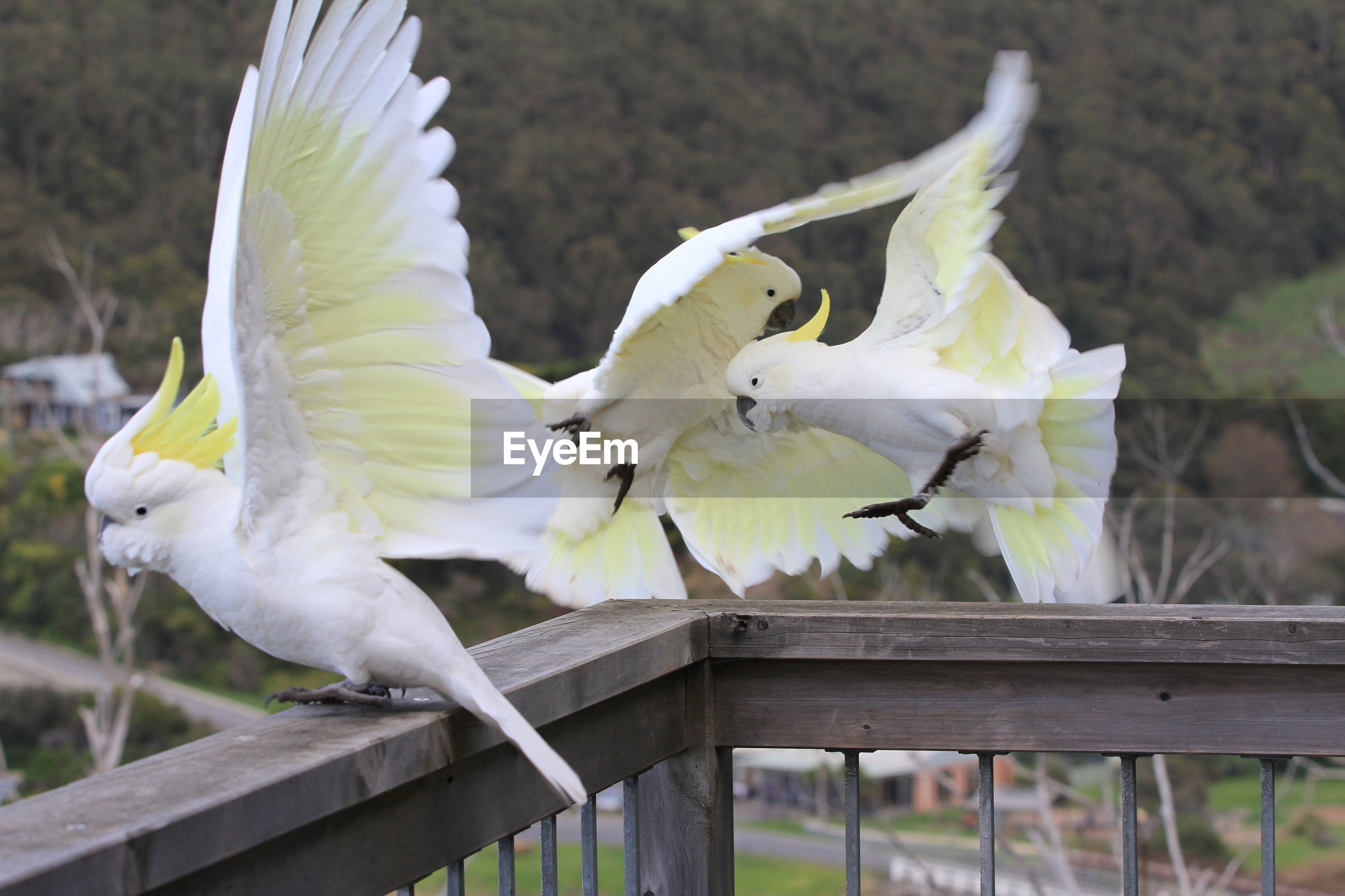 CLOSE-UP OF BIRDS FLYING AGAINST RAILING