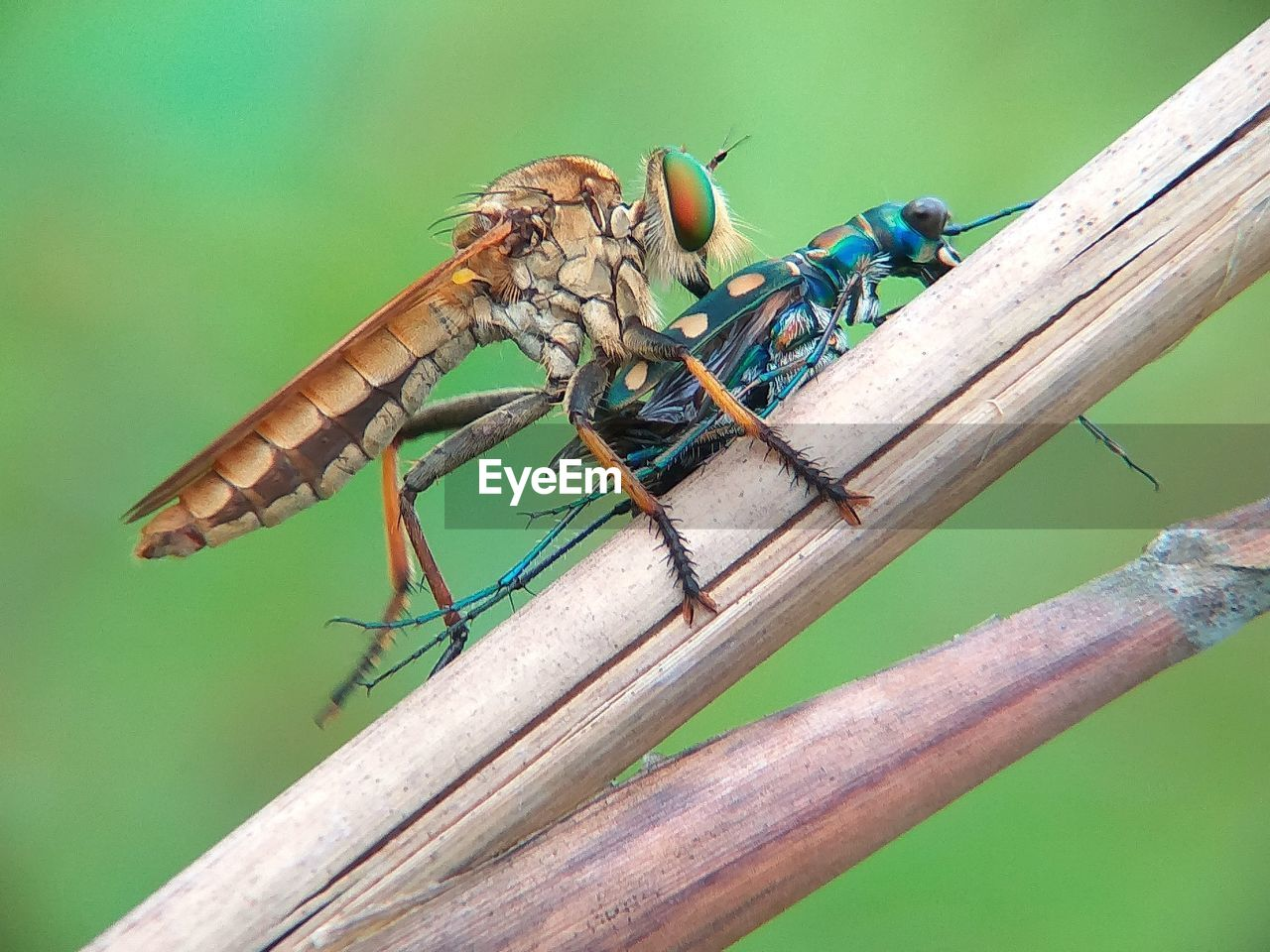 animal wildlife, animals in the wild, animal themes, invertebrate, insect, animal, one animal, close-up, day, wood - material, animal wing, no people, nature, focus on foreground, plant, dragonfly, green color, zoology, outdoors