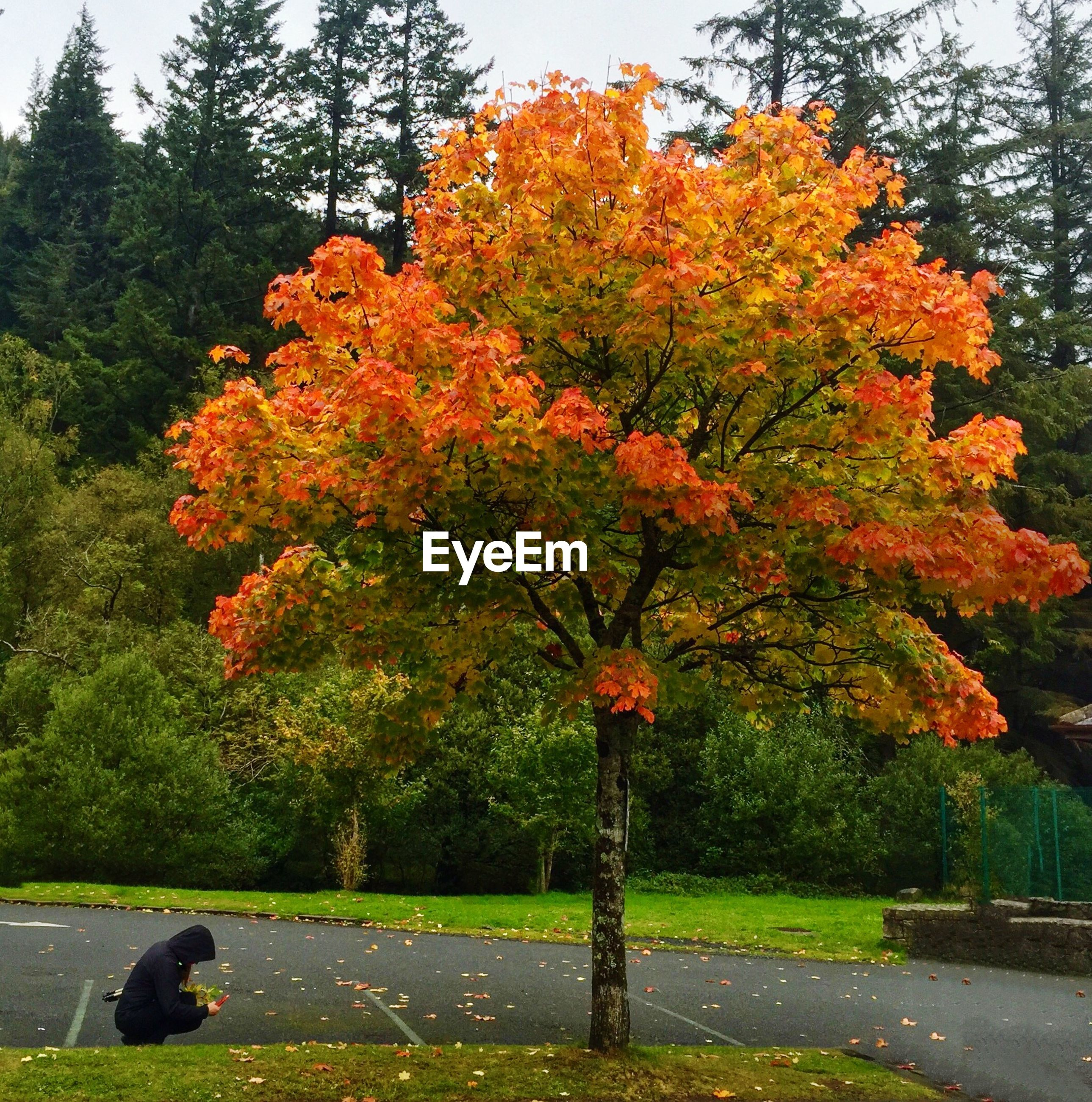 Autumn leaves on red tree