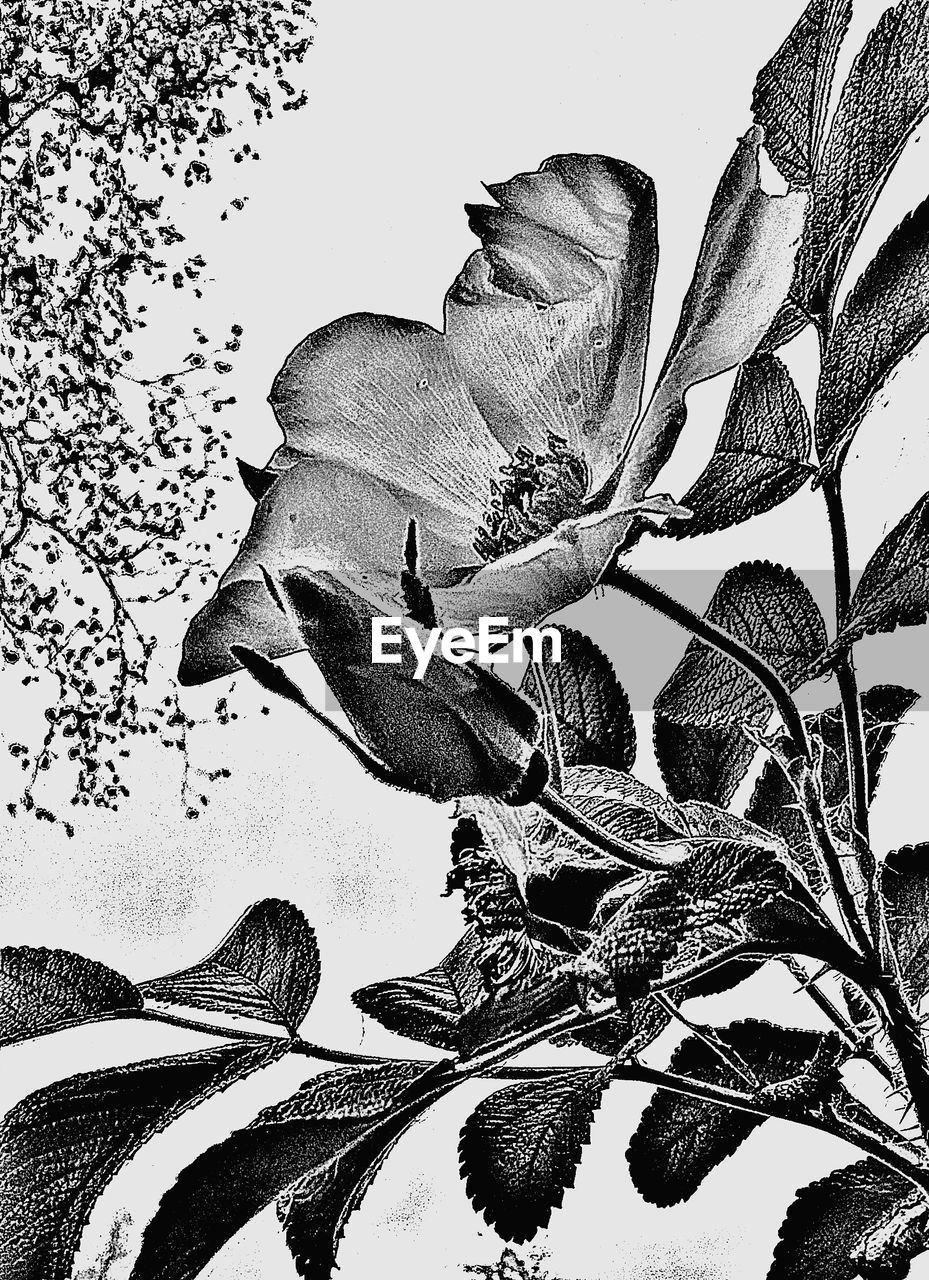 leaf, growth, nature, no people, low angle view, plant, beauty in nature, outdoors, tree, branch, flower, day, sky, close-up, animal themes
