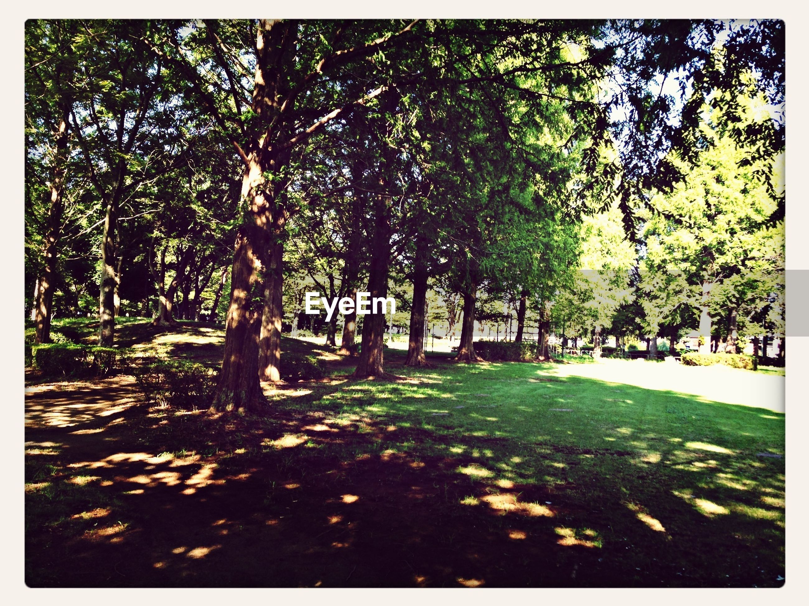 tree, transfer print, auto post production filter, growth, tranquility, park - man made space, nature, sunlight, tranquil scene, beauty in nature, tree trunk, shadow, park, branch, green color, leaf, scenics, day, footpath, outdoors