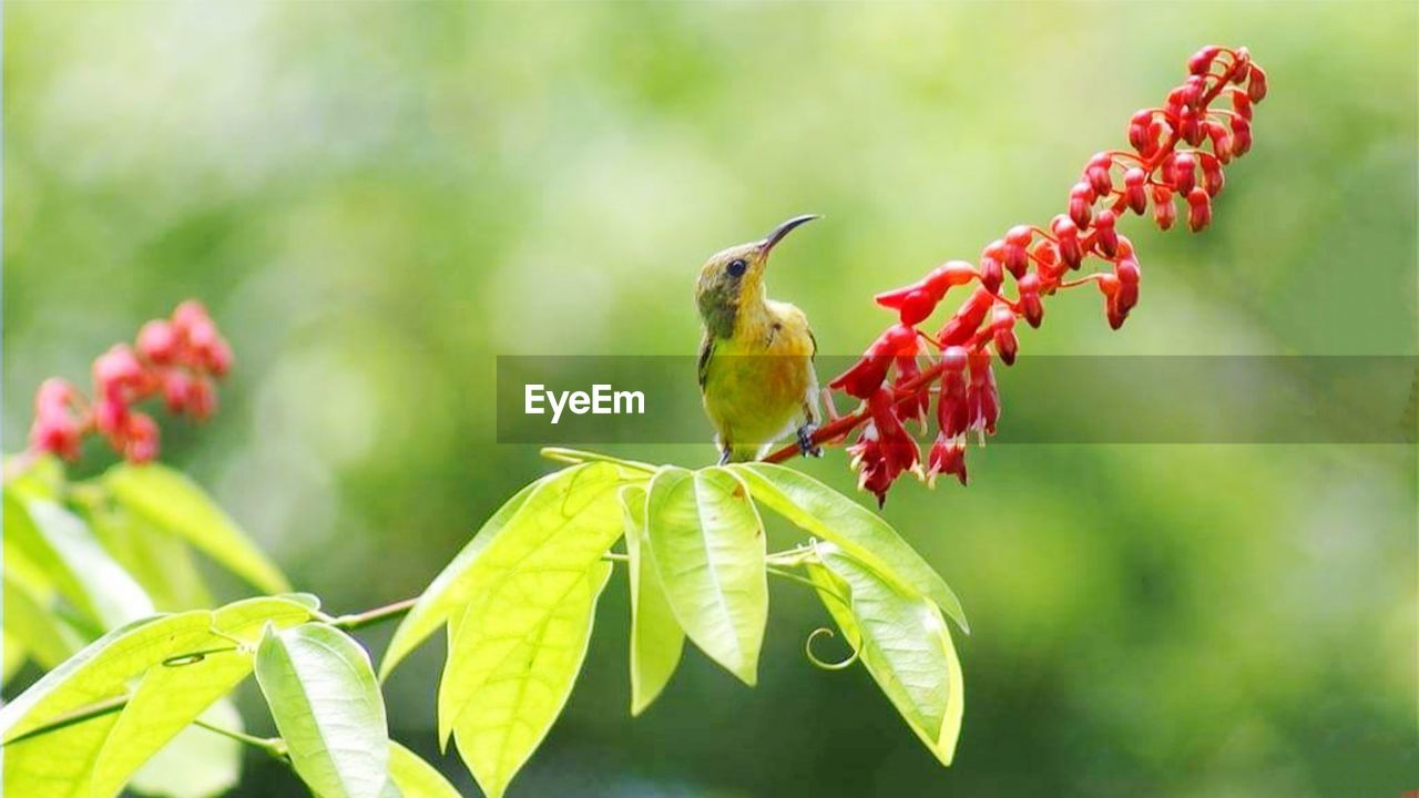 animal themes, animal, animal wildlife, animals in the wild, plant, one animal, focus on foreground, bird, green color, plant part, vertebrate, perching, growth, leaf, nature, no people, beauty in nature, close-up, red, day, outdoors, pollination