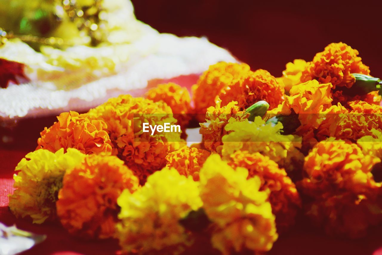 flower, flowering plant, freshness, marigold, beauty in nature, fragility, vulnerability, close-up, plant, selective focus, orange color, yellow, no people, flower head, inflorescence, nature, petal, indoors, day, flower arrangement