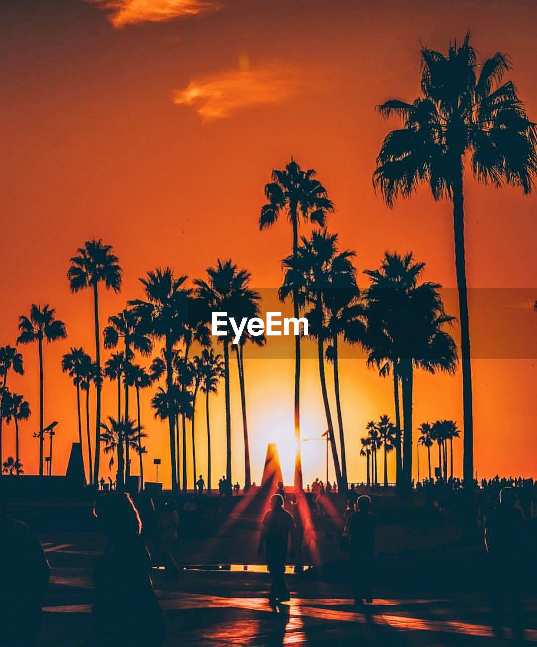 palm tree, sunset, sea, travel, vacations, travel destinations, tree, beach, tourism, outdoors, nature, scenics, landscape, dramatic sky, water, sky, cityscape, night, no people