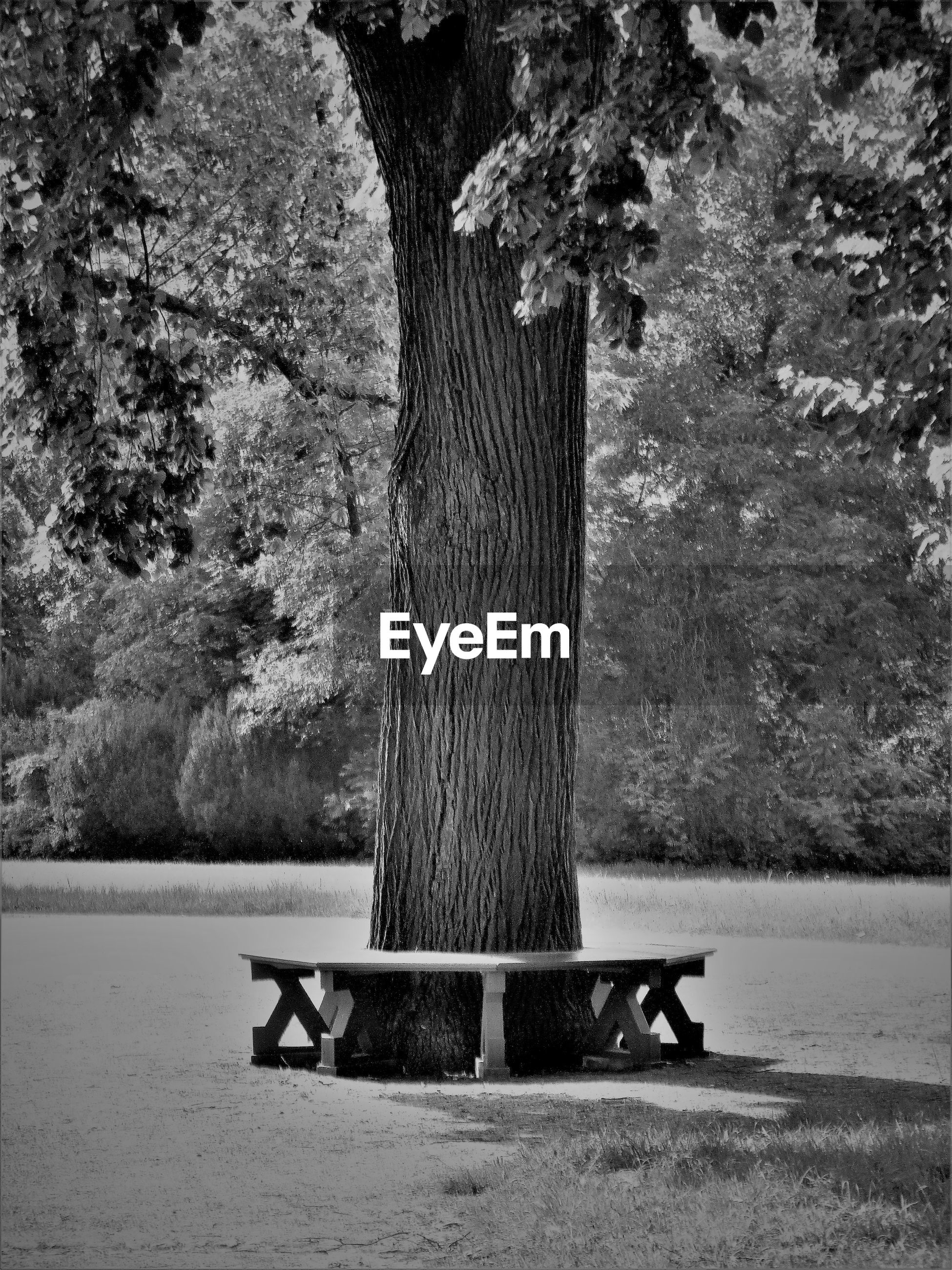 BENCH IN PARK BY LAKE AGAINST TREES