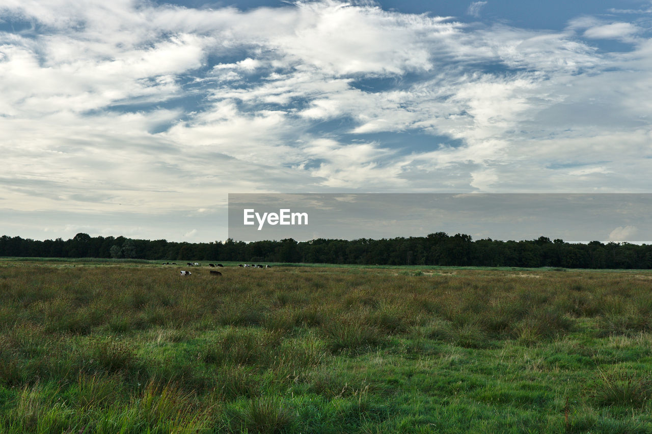grass, field, nature, landscape, sky, tranquility, beauty in nature, tranquil scene, cloud - sky, scenics, no people, day, outdoors, tree, growth, animal themes, mammal