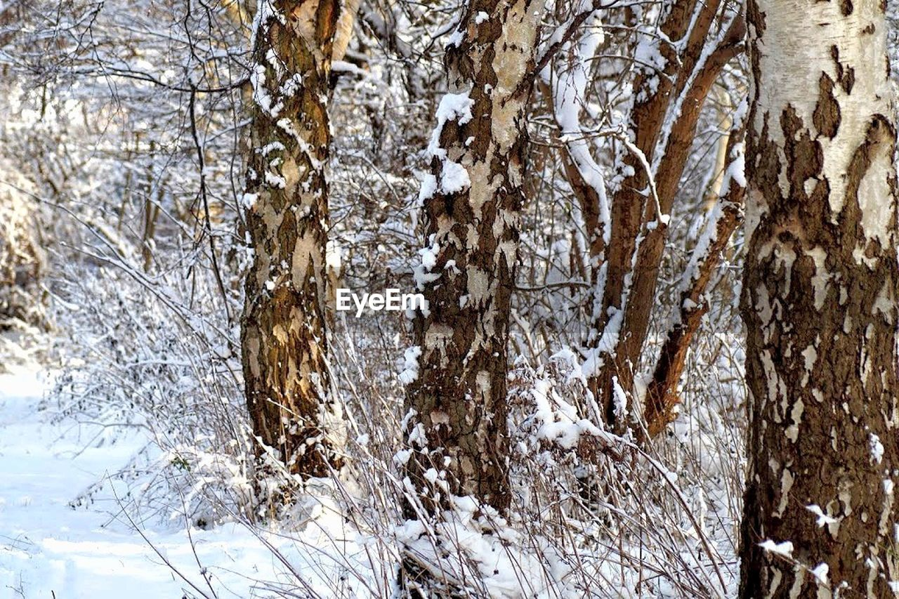 snow, winter, cold temperature, nature, tree, white color, beauty in nature, tranquility, day, tree trunk, no people, outdoors, frozen, scenics, forest, bare tree, branch, close-up