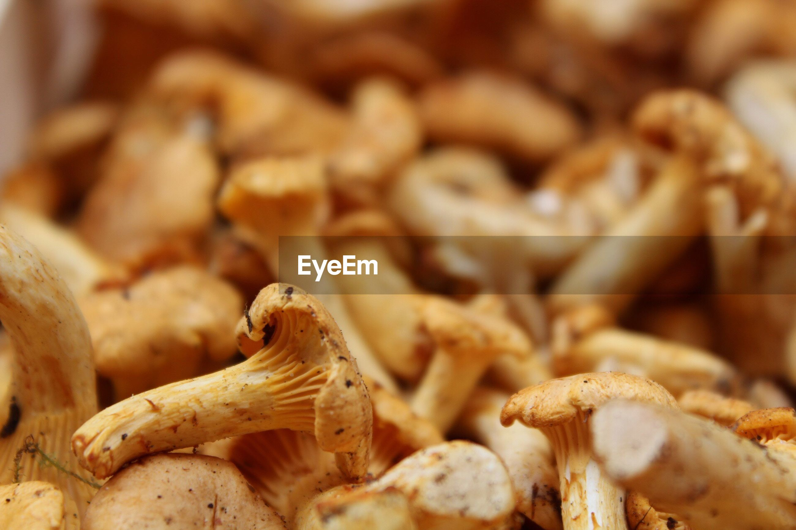 close-up, food and drink, mushroom, food, no people, freshness, healthy eating, nature, fungus, indoors, fragility, toadstool, fly agaric, day