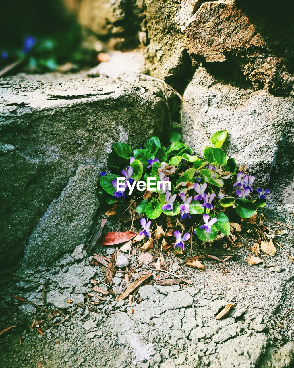 flower, nature, day, high angle view, outdoors, rock - object, beauty in nature, growth, no people, plant, fragility, leaf, flower head, close-up, freshness