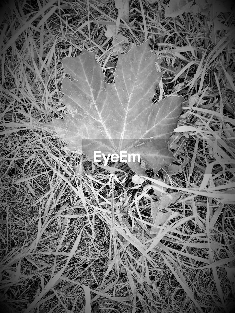 leaf, high angle view, fragility, outdoors, no people, close-up, day, nature, grass