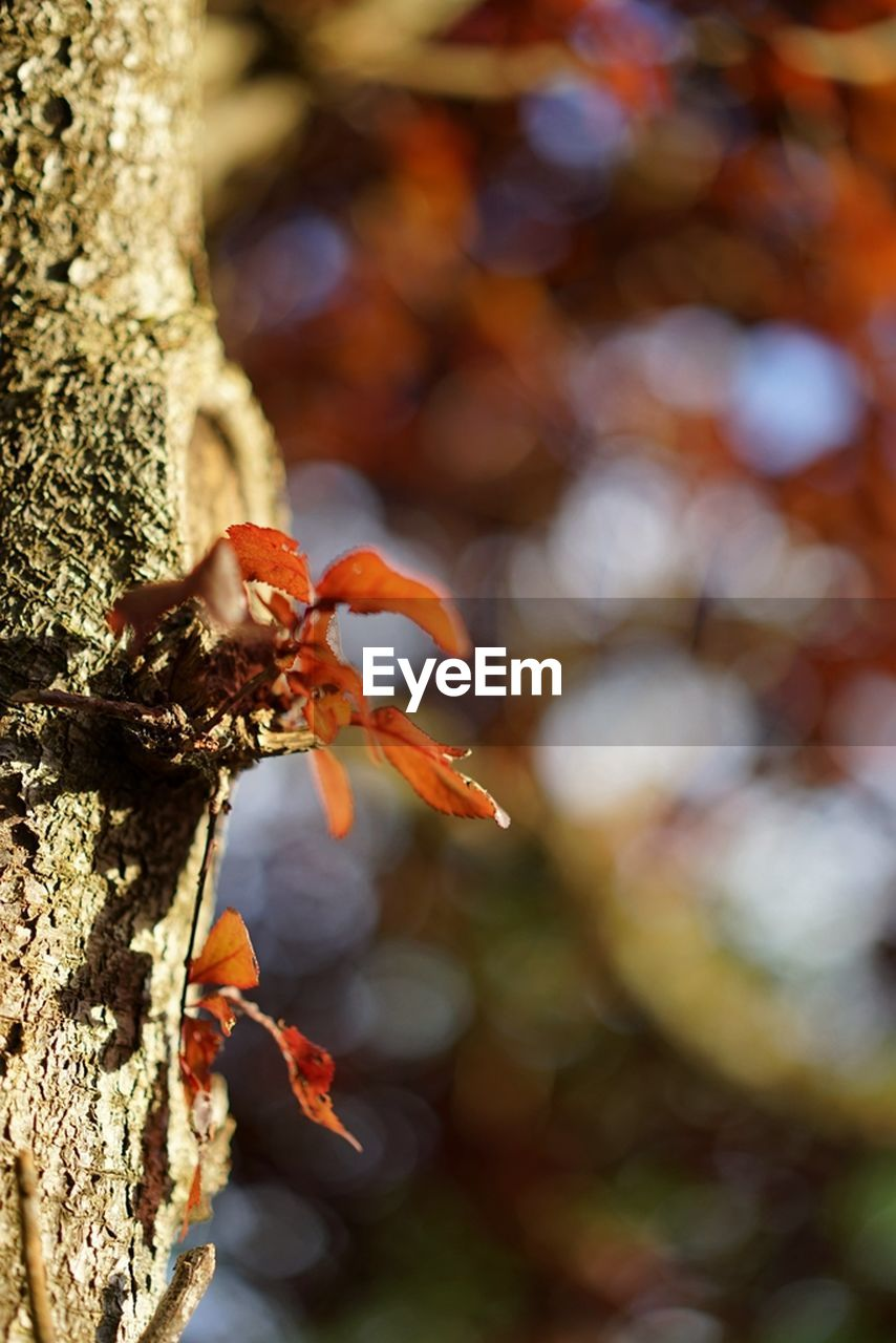 tree trunk, tree, focus on foreground, growth, outdoors, day, close-up, nature, no people, lichen, beauty in nature