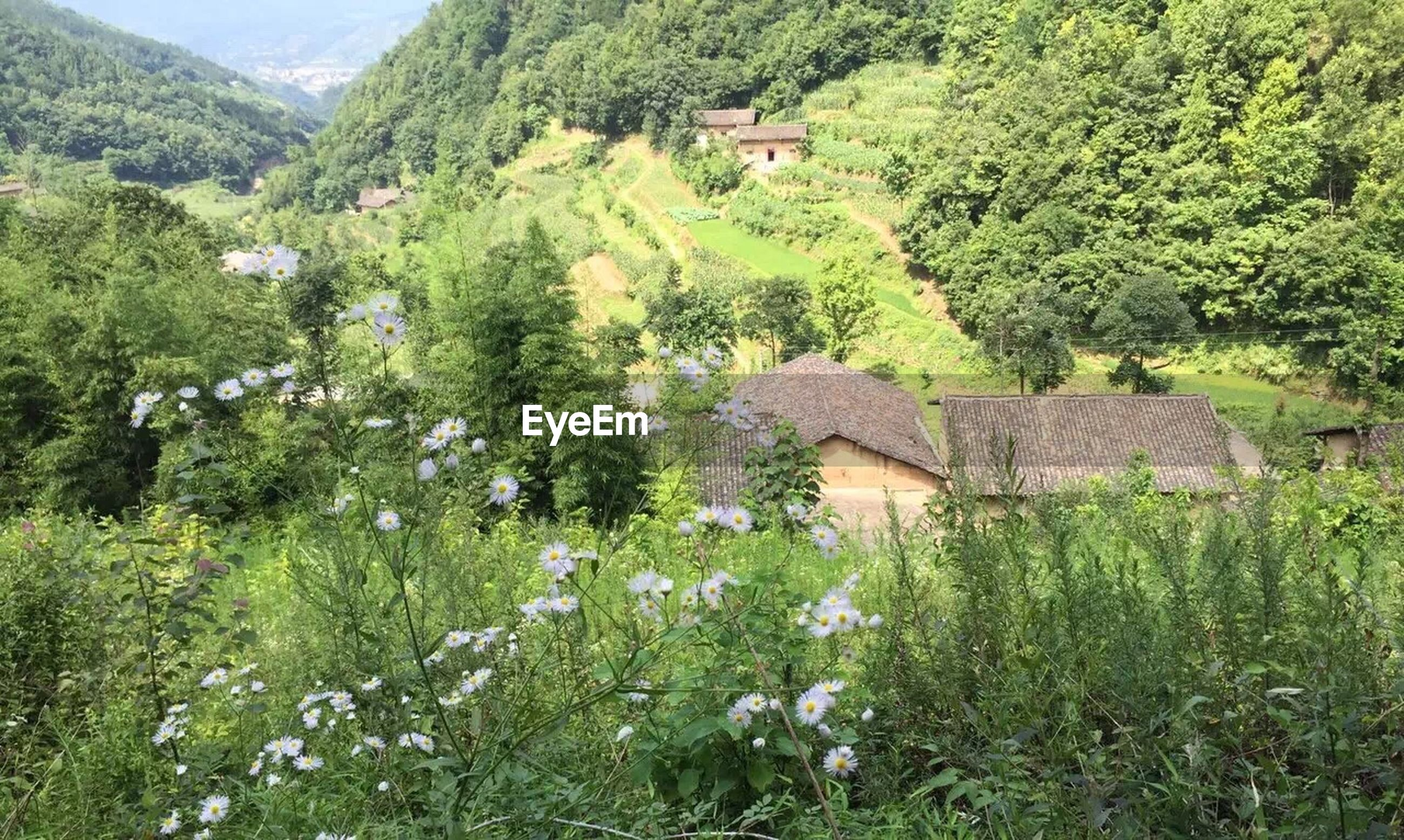 growth, nature, tree, green color, house, rural scene, no people, beauty in nature, flower, field, agriculture, tranquil scene, outdoors, plant, building exterior, mountain, landscape, day, scenics, architecture