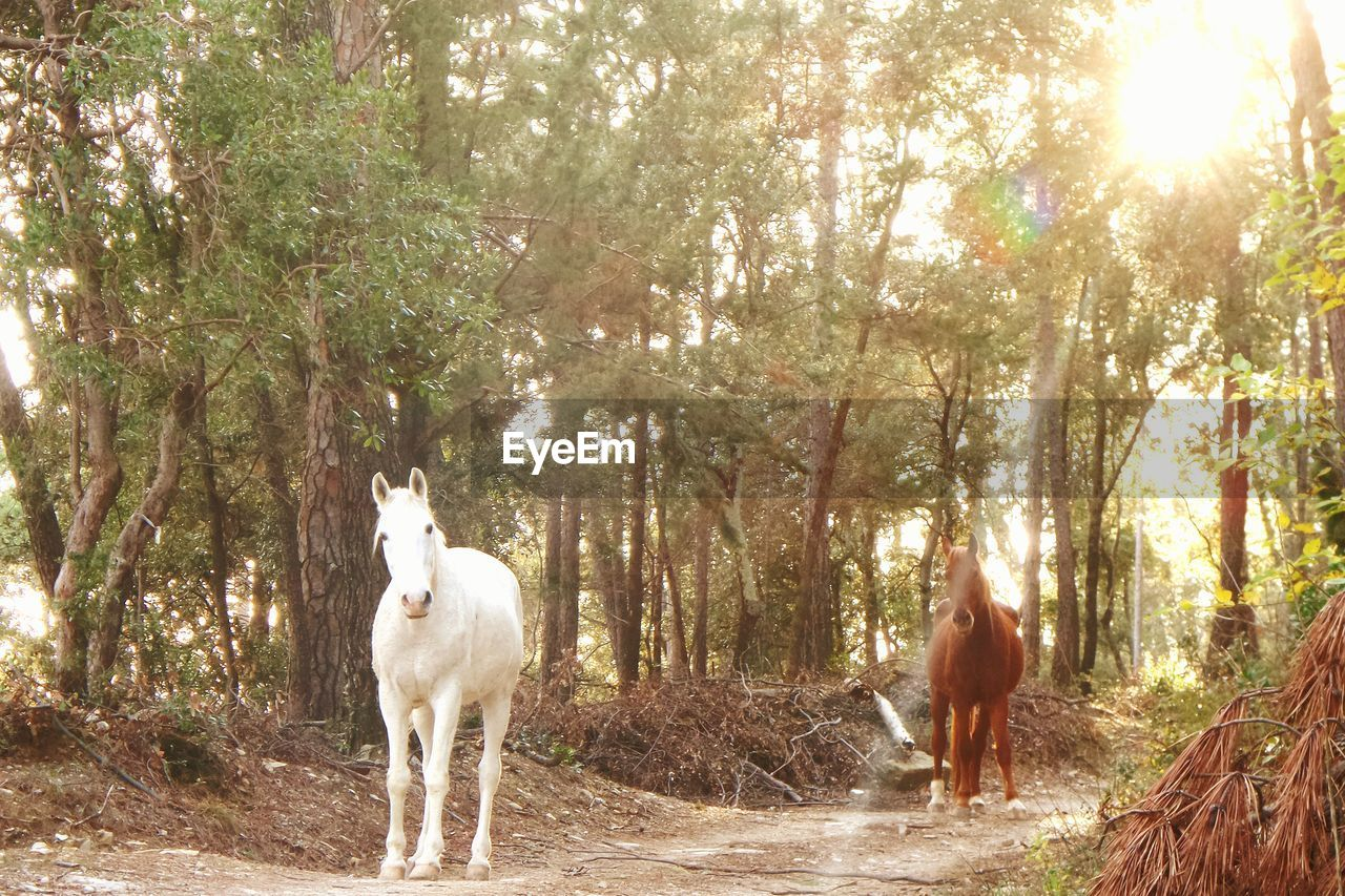 White And Brown Horses On Dirt Road By Trees