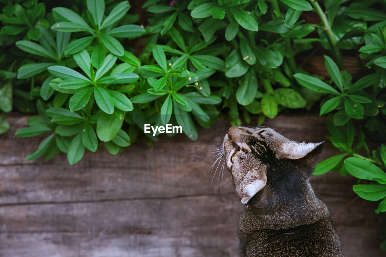 High Angle View Of Cat By Plants