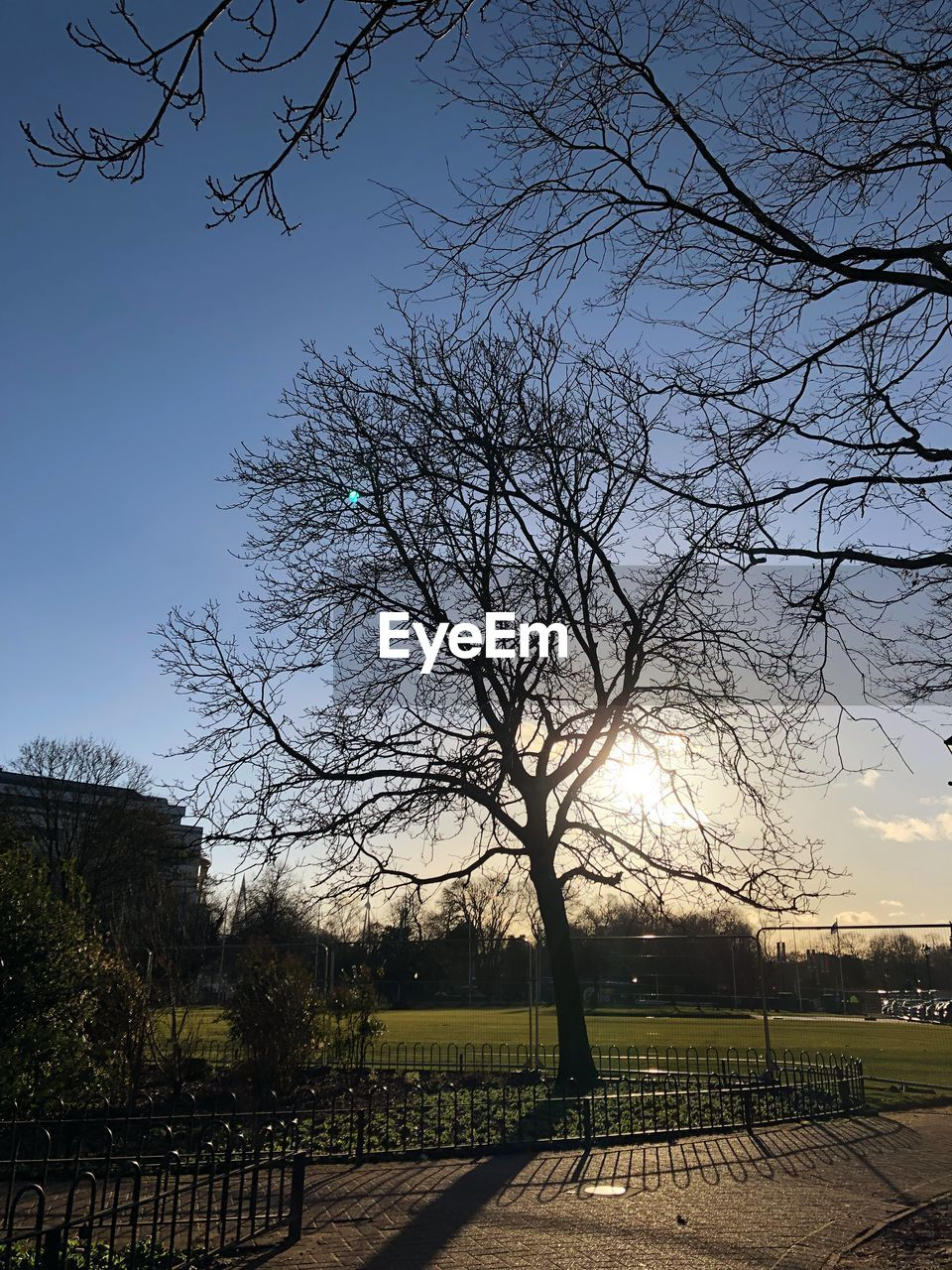 tree, bare tree, nature, sky, beauty in nature, no people, outdoors, tranquility, scenics, branch, clear sky, day