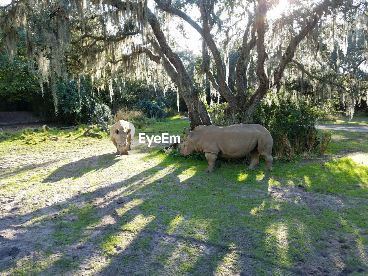 animal themes, tree, mammal, sunlight, day, shadow, nature, outdoors, no people, grass, animals in the wild, domestic animals