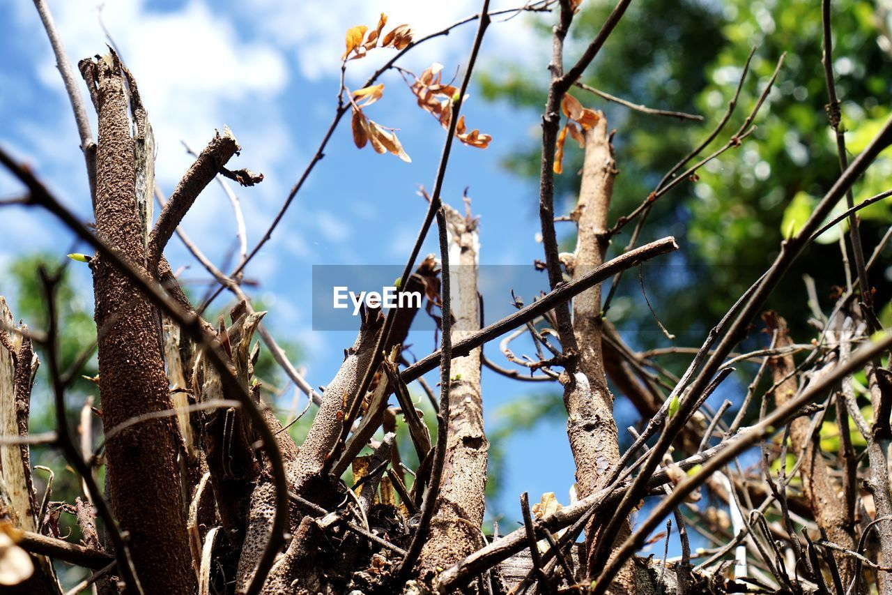 plant, tree, nature, focus on foreground, day, growth, no people, branch, tranquility, beauty in nature, sky, outdoors, land, close-up, low angle view, twig, sunlight, dry, plant part, leaf