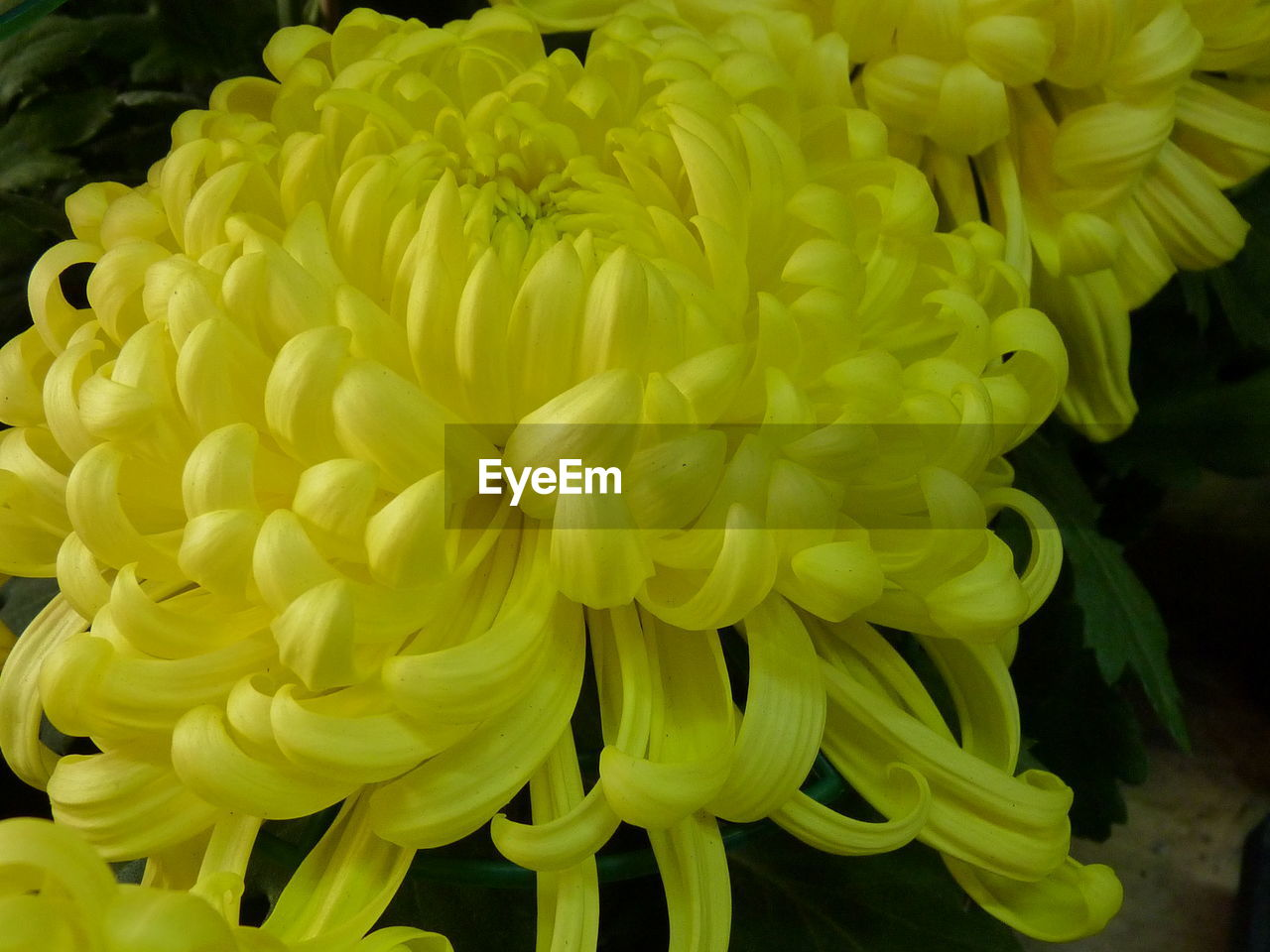 flower, fragility, petal, flower head, freshness, beauty in nature, yellow, no people, close-up, nature, growth, springtime, blooming, outdoors, day