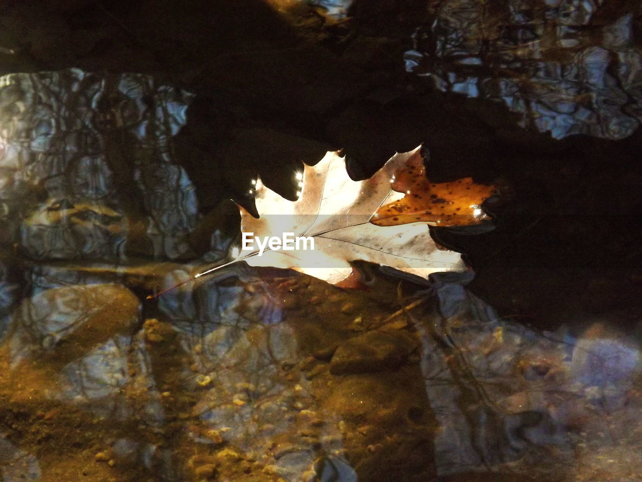 High angle view of autumn leaf on stream