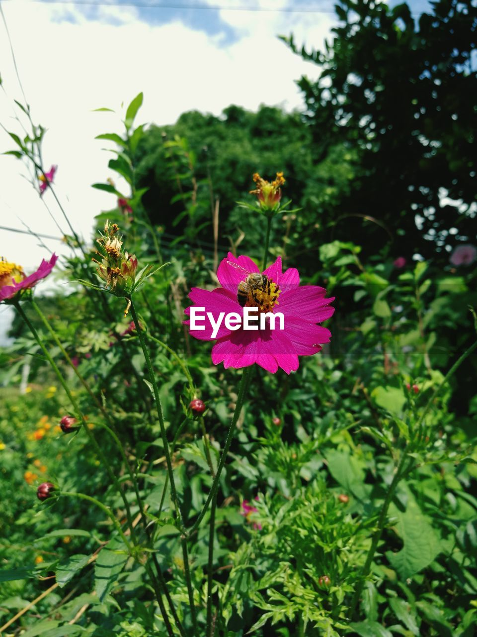 flower, growth, fragility, petal, freshness, beauty in nature, nature, plant, flower head, focus on foreground, blooming, no people, green color, day, outdoors, pink color, close-up, zinnia, animal themes