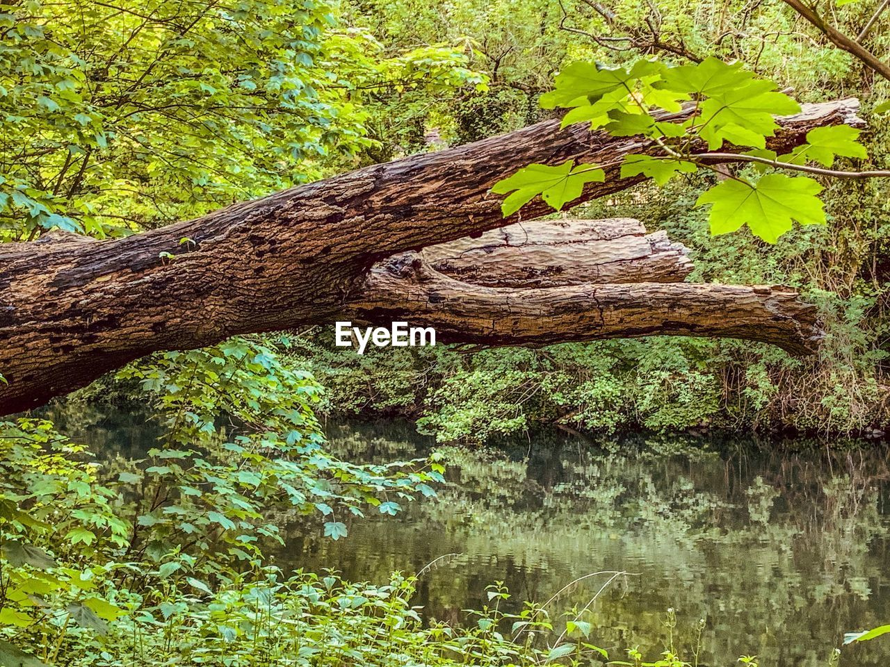 plant, tree, water, nature, tree trunk, green color, trunk, growth, day, lake, no people, tranquility, plant part, outdoors, wood - material, branch, beauty in nature, waterfront, reflection, bark