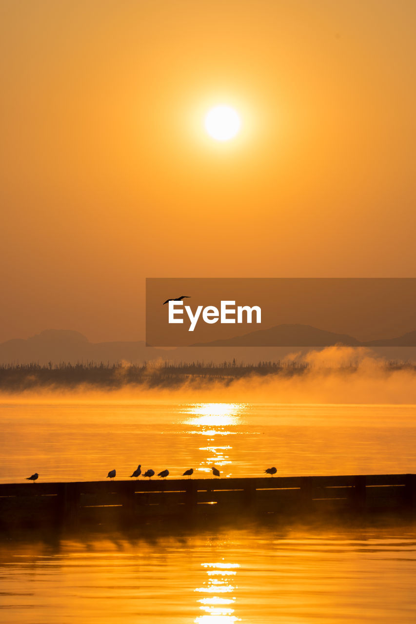 sunset, sky, orange color, bird, water, scenics - nature, beauty in nature, vertebrate, animal themes, animal, sun, flying, animal wildlife, animals in the wild, tranquil scene, tranquility, no people, silhouette, waterfront, outdoors