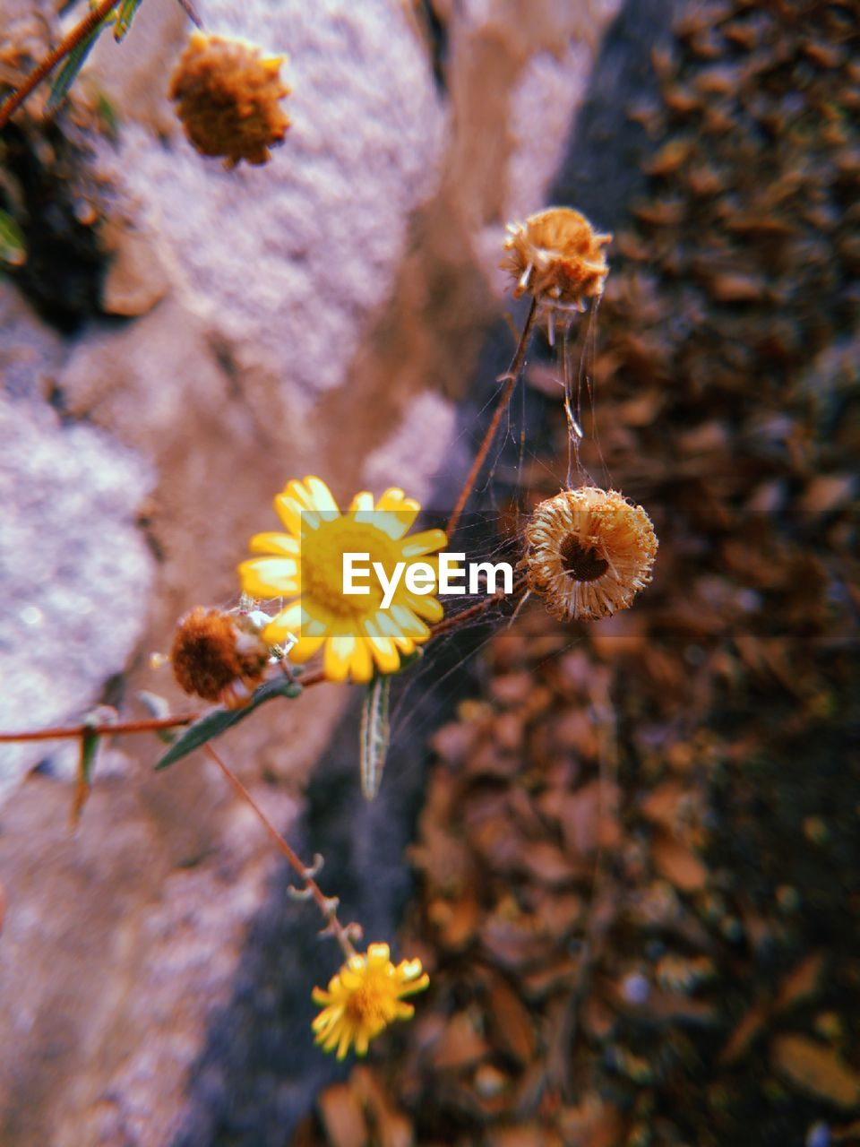 flowering plant, fragility, flower, vulnerability, plant, close-up, growth, beauty in nature, nature, freshness, focus on foreground, no people, selective focus, day, flower head, inflorescence, yellow, petal, outdoors, botany, pollen, spring