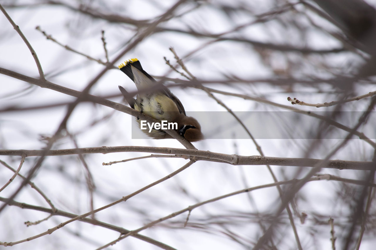 bird, vertebrate, animal themes, animal, animal wildlife, animals in the wild, branch, one animal, perching, tree, no people, plant, bare tree, day, focus on foreground, nature, outdoors, close-up, low angle view, selective focus