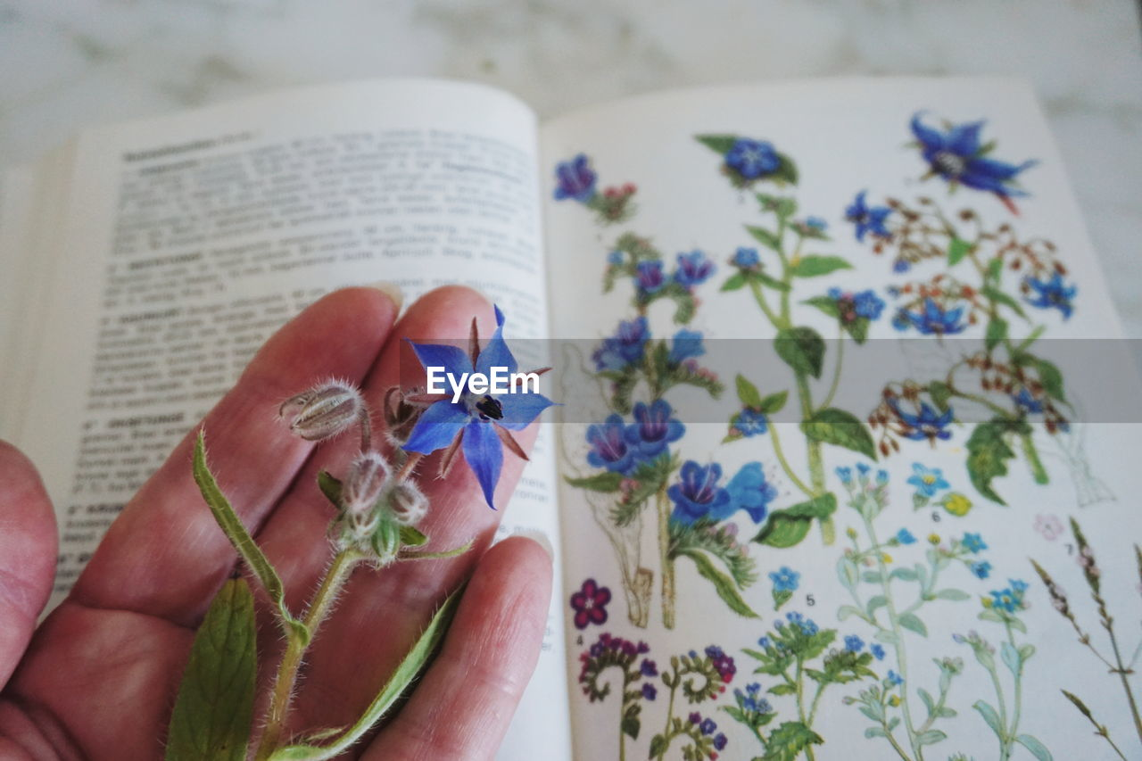Close-up of hand holding flower over book at table