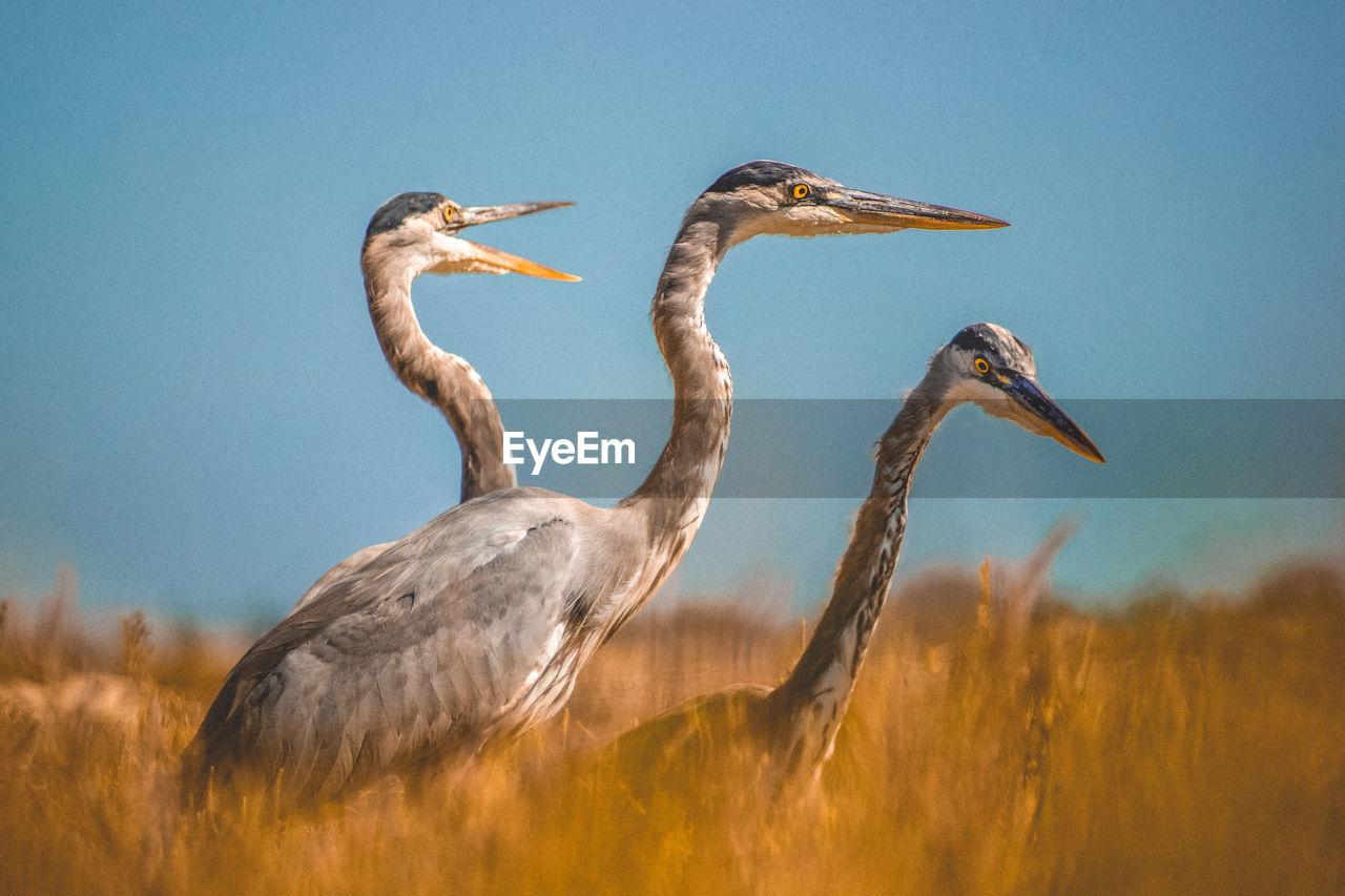 Gray Herons On Field Against Sky