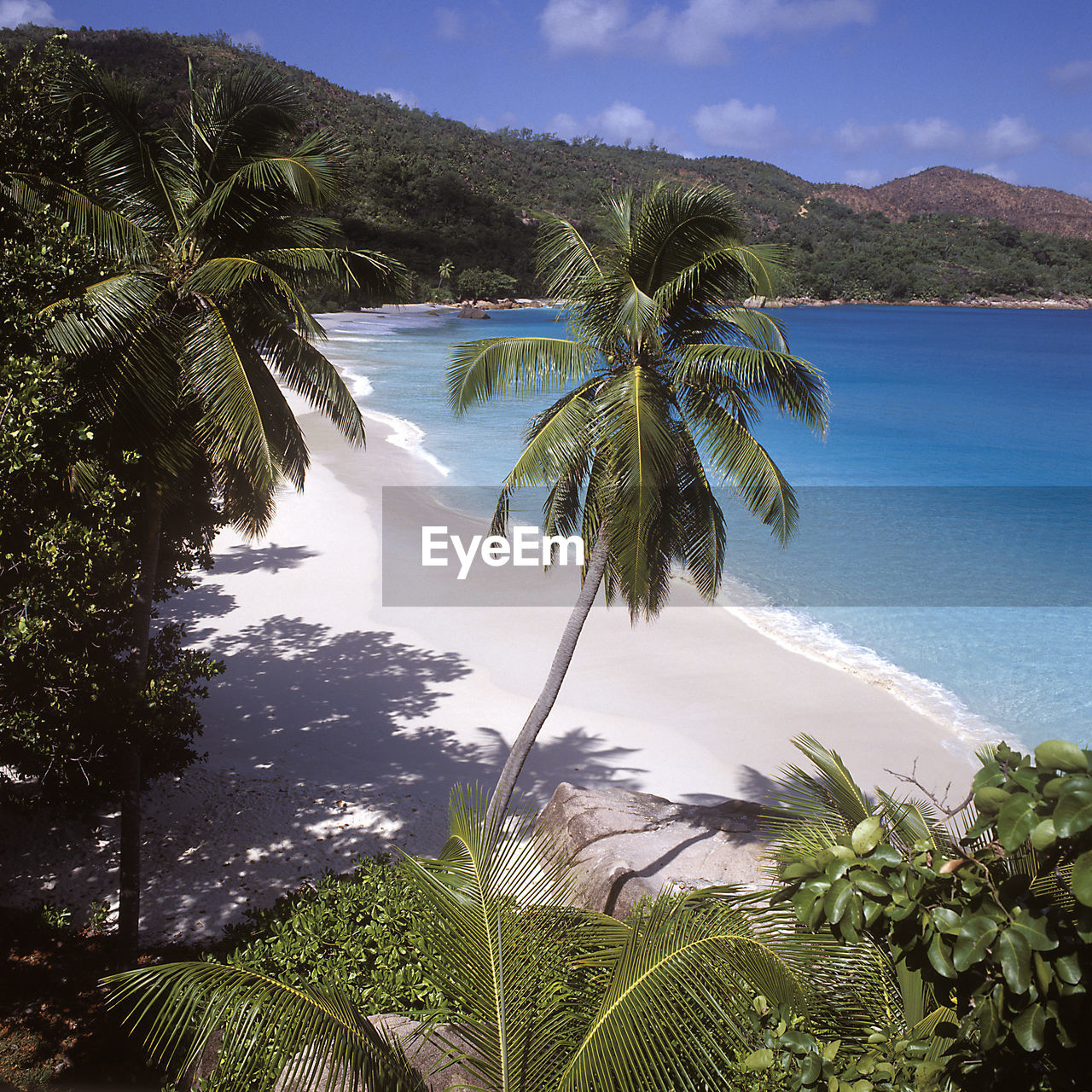 palm tree, sea, nature, scenics, beauty in nature, beach, tree, water, tranquil scene, sky, tranquility, idyllic, remote, growth, no people, horizon over water, day, outdoors, sand, mountain