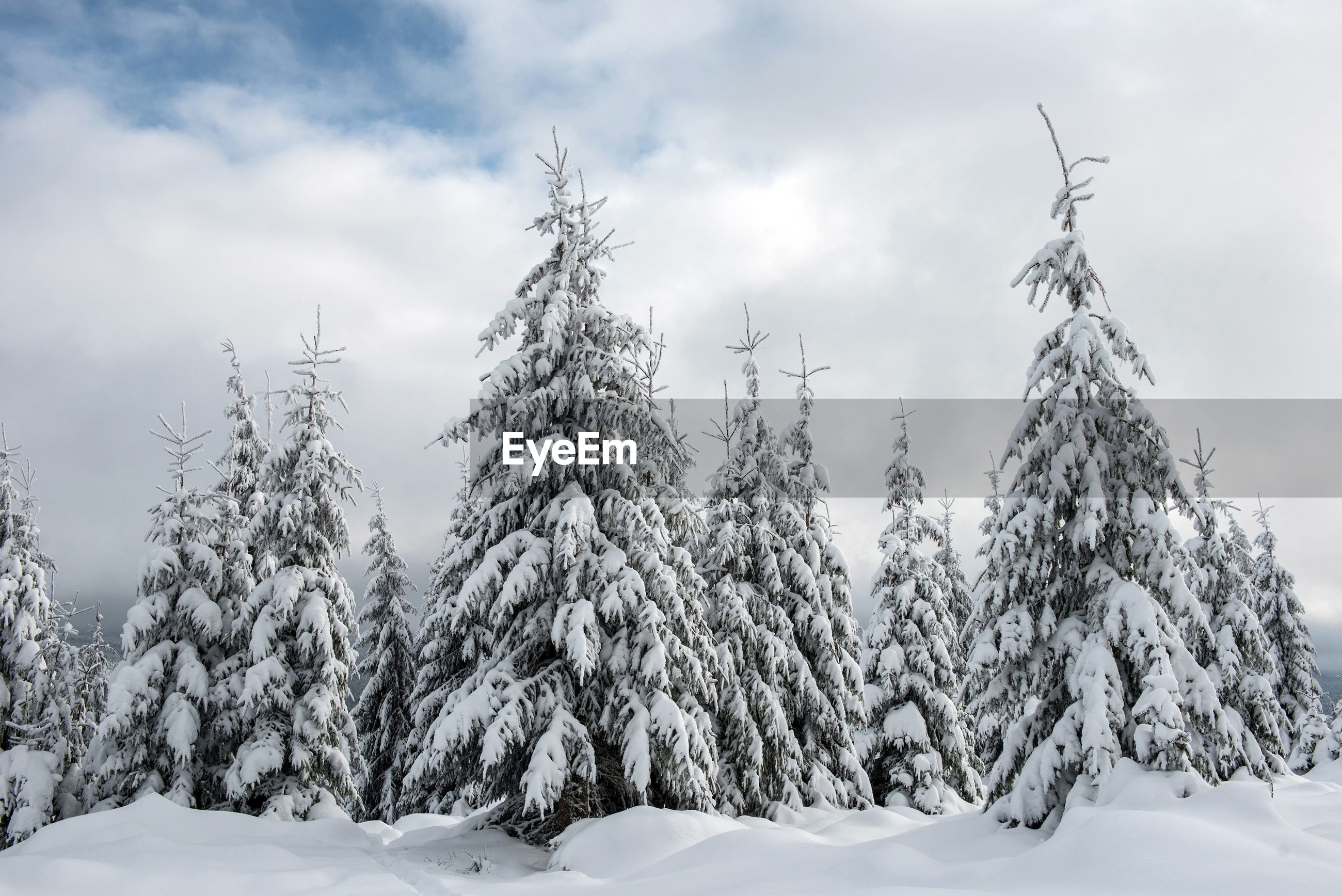 Scenic view of snowcapped trees against sky