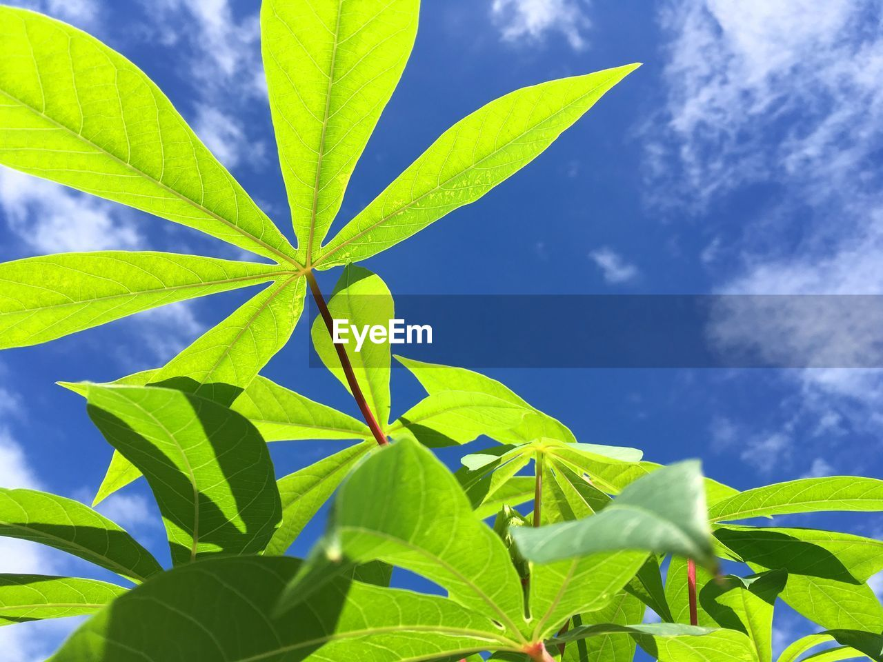 leaf, plant part, growth, green color, plant, nature, sky, beauty in nature, no people, day, close-up, low angle view, outdoors, sunlight, cloud - sky, blue, tranquility, freshness, green, tree, leaves