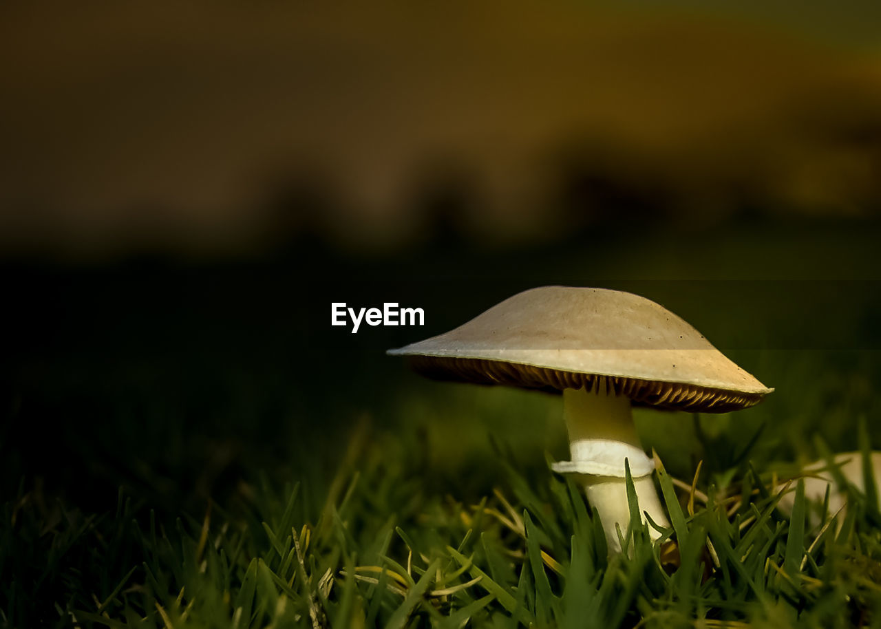 Surface Level Of Mushroom
