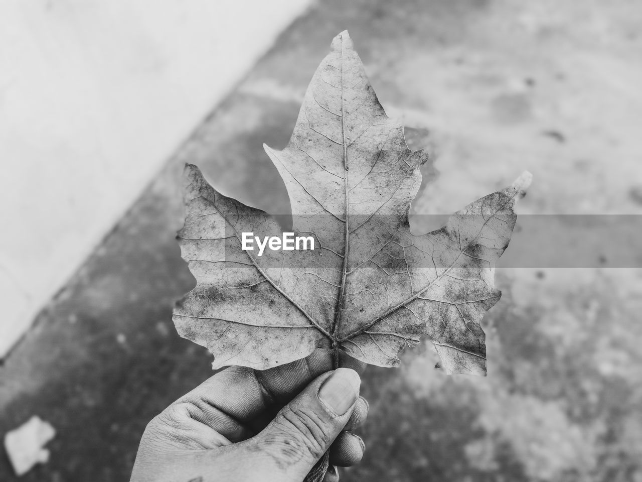 human hand, hand, human body part, one person, leaf, holding, plant part, real people, personal perspective, unrecognizable person, finger, autumn, human finger, body part, close-up, focus on foreground, day, dry, nature, maple leaf, change, outdoors, human limb, leaves, natural condition