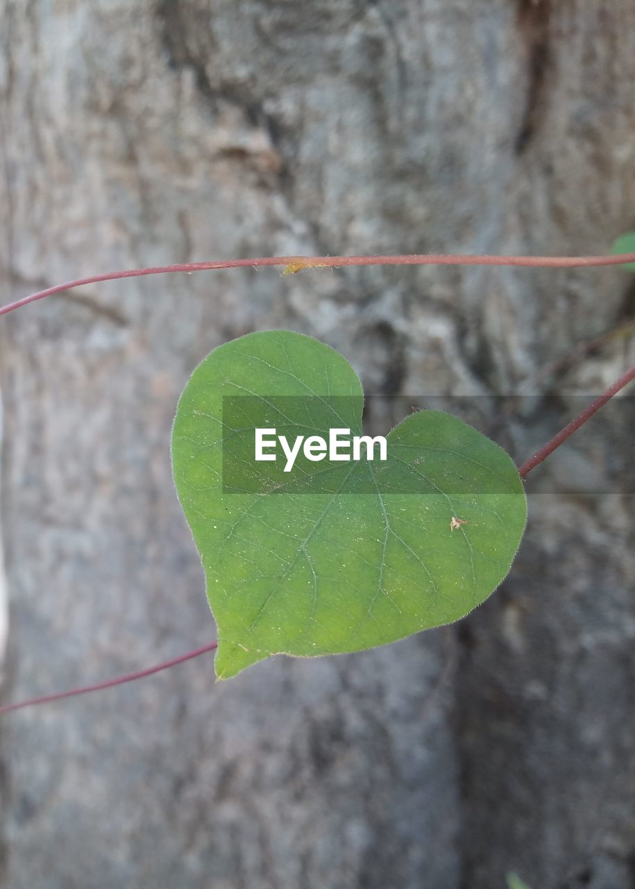leaf, plant part, plant, close-up, nature, no people, day, focus on foreground, green color, growth, outdoors, beauty in nature, plant stem, leaf vein, wall - building feature, beginnings, vulnerability, freshness, fragility, high angle view