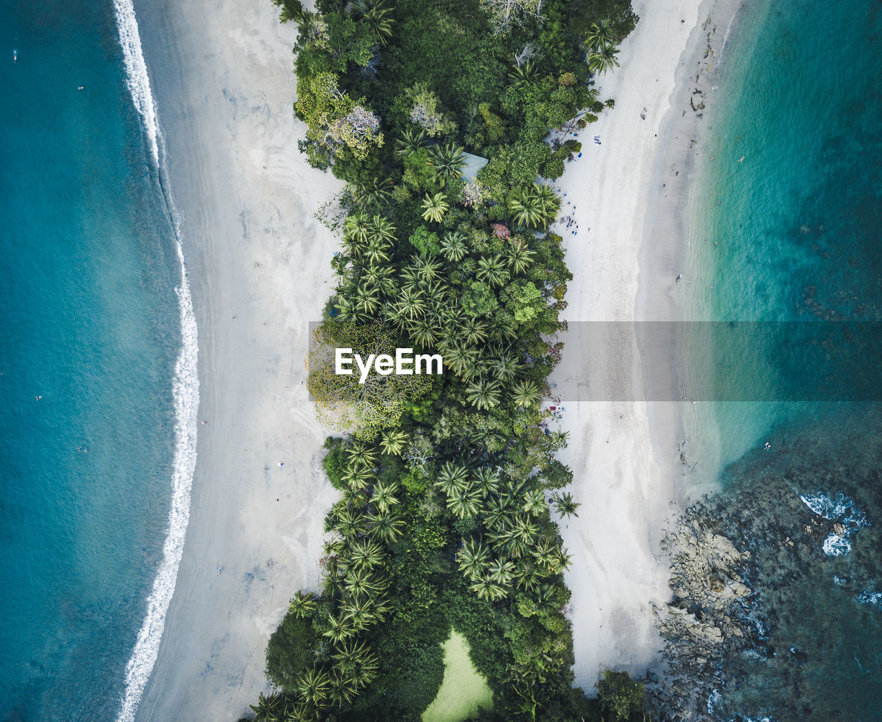 plant, nature, water, day, land, beauty in nature, no people, tree, sea, green color, scenics - nature, outdoors, high angle view, motion, beach, growth, sky, sport, power in nature