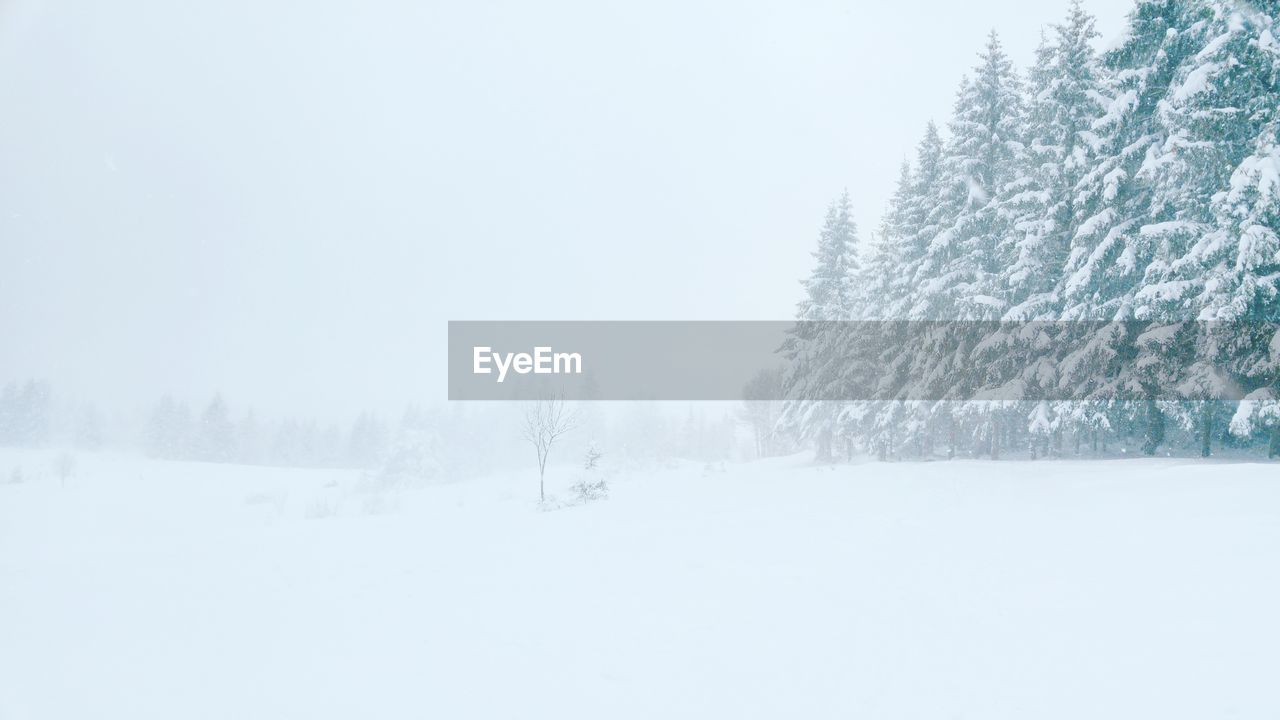 snow, winter, cold temperature, tree, plant, beauty in nature, land, scenics - nature, tranquility, tranquil scene, nature, day, sky, white color, non-urban scene, no people, copy space, covering, environment, outdoors, snowing, coniferous tree
