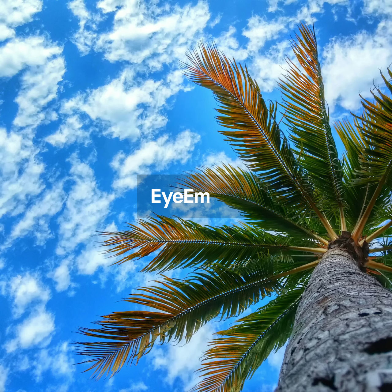 Directly below shot of coconut palm tree against cloudy blue sky on sunny day