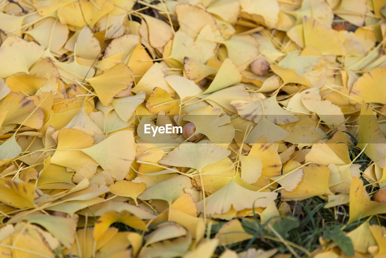 yellow, dry, no people, large group of objects, fragility, abundance, close-up, leaf, full frame, day, nature, food, outdoors, flower