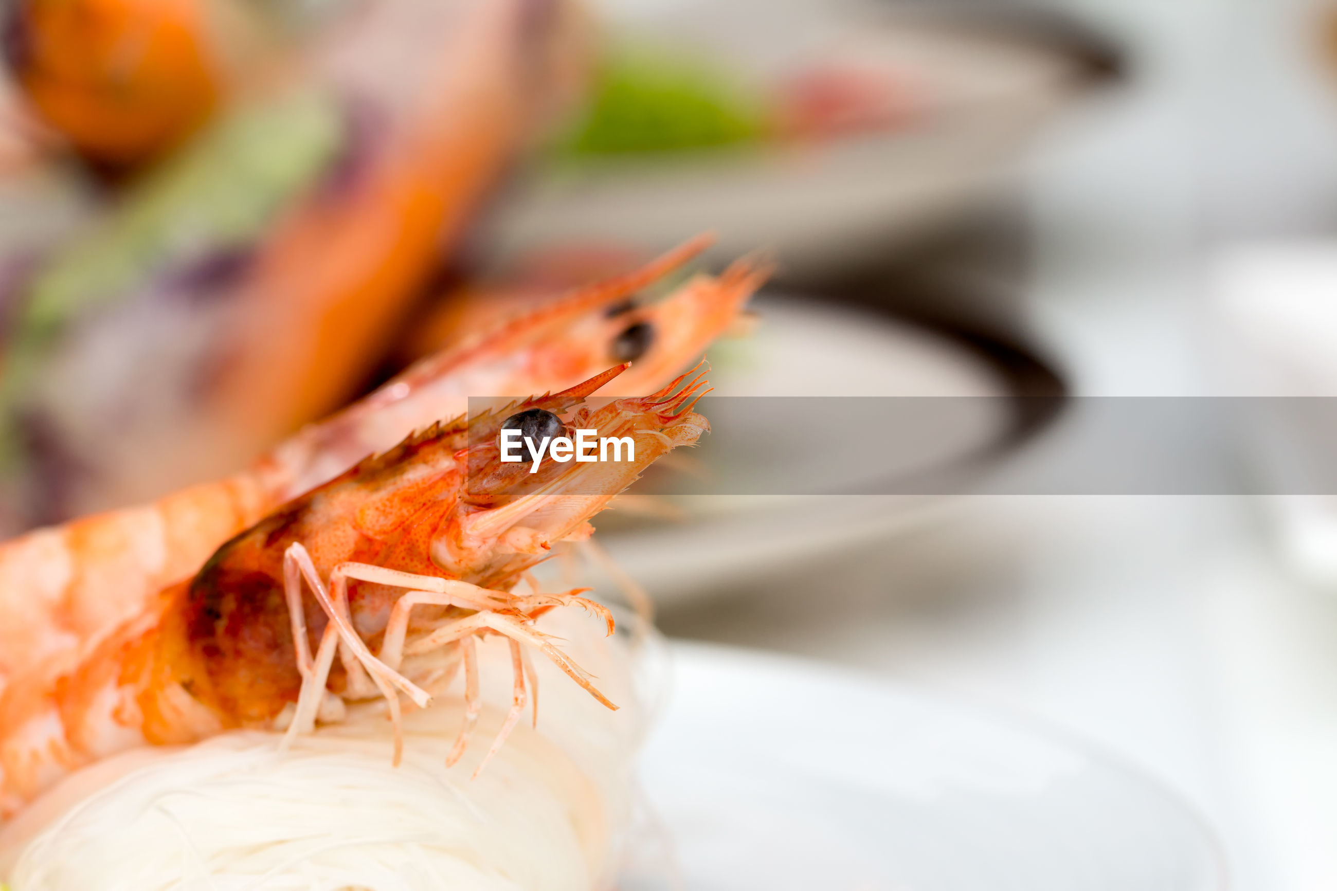 CLOSE-UP OF CRAB IN PLATE