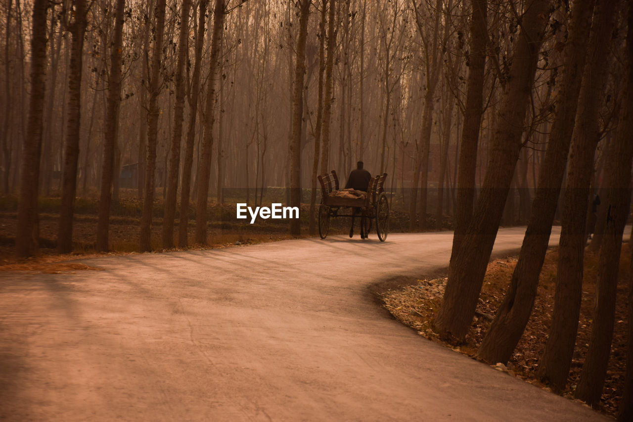 Man Riding Horse Cart On Road Amidst Trees In Forest