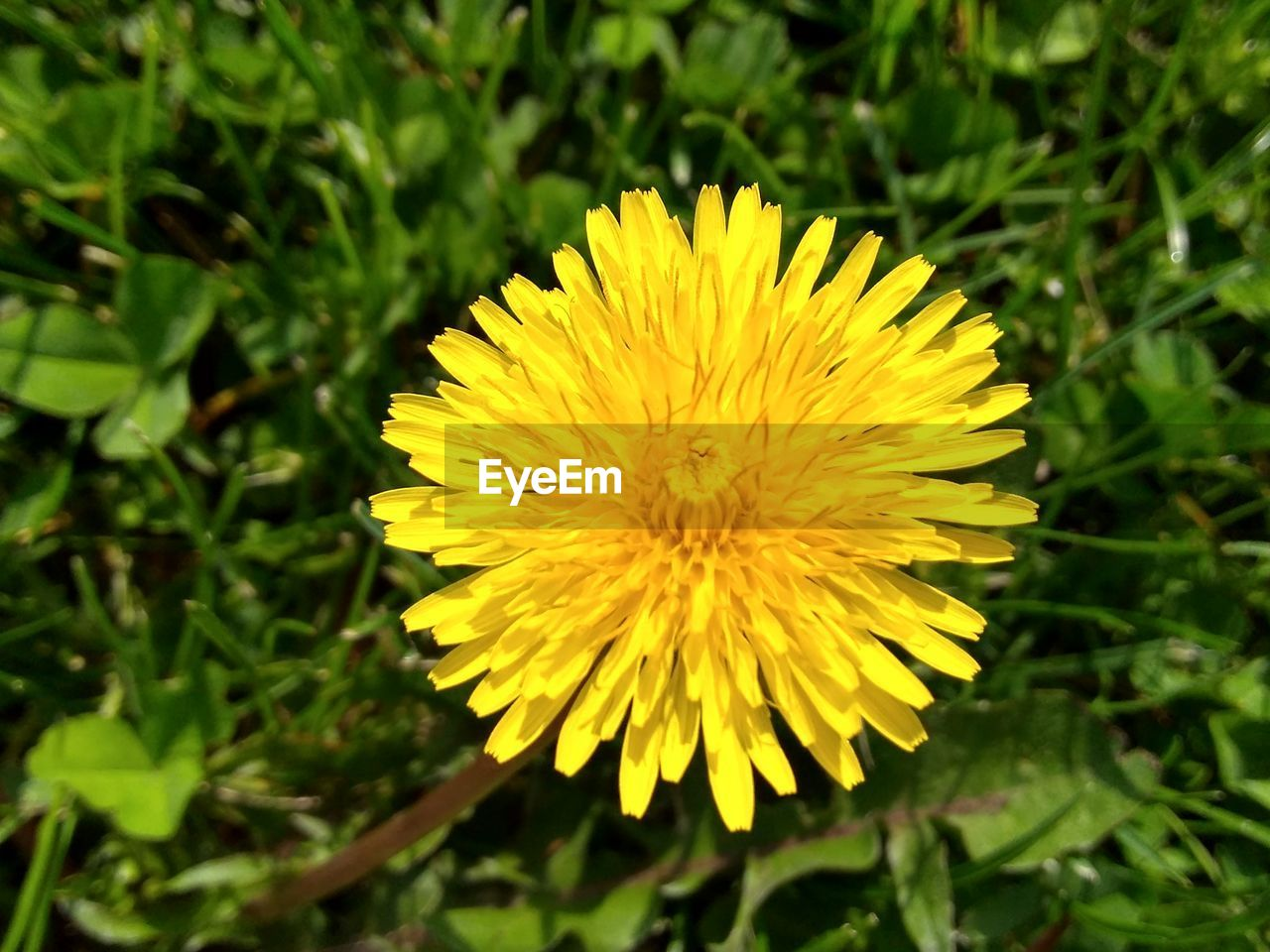flower, yellow, flowering plant, plant, vulnerability, fragility, beauty in nature, freshness, growth, petal, flower head, close-up, inflorescence, nature, focus on foreground, day, no people, land, field, outdoors, spring